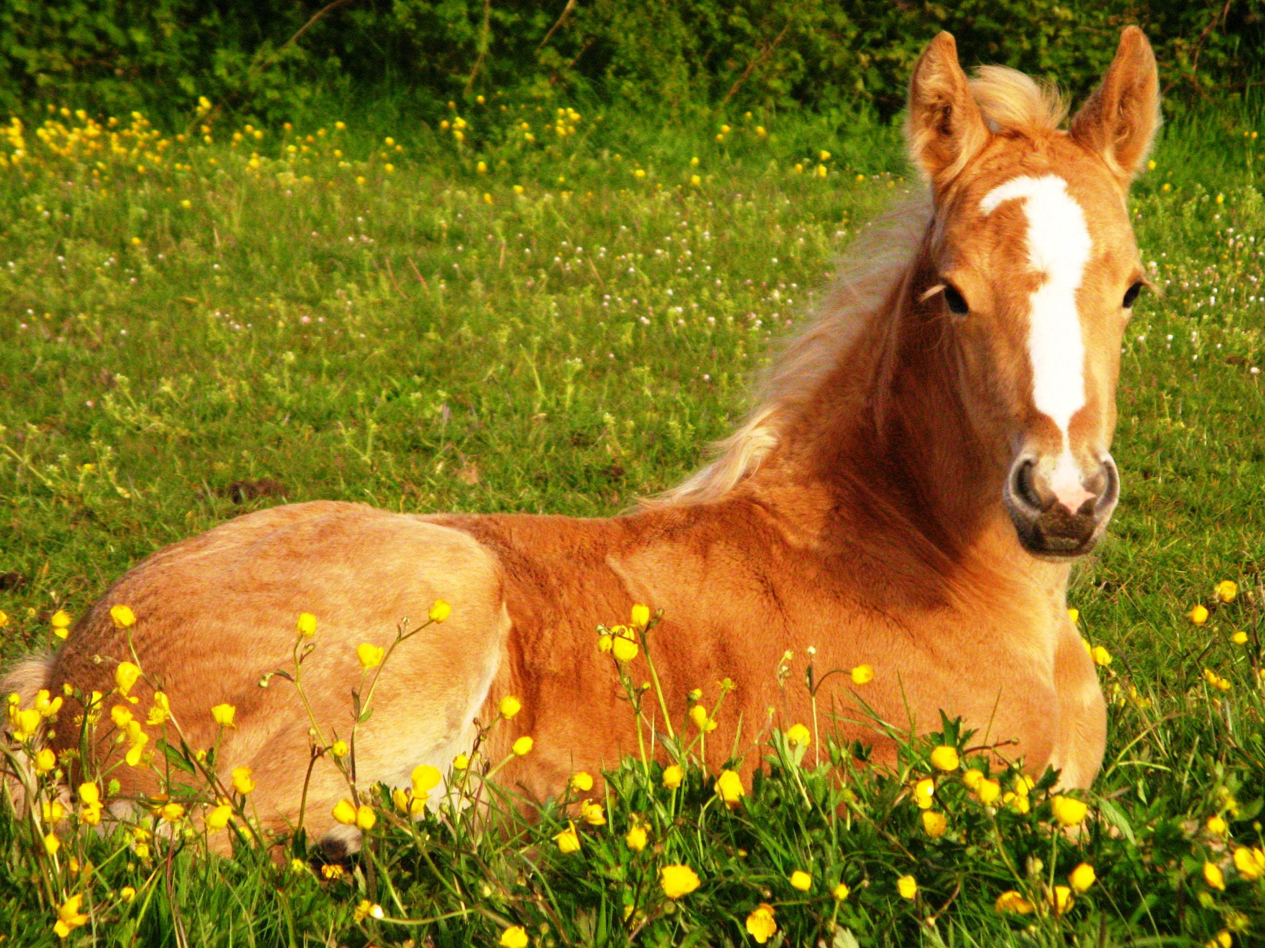 Cute Horse Wallpapers 54 Pictures