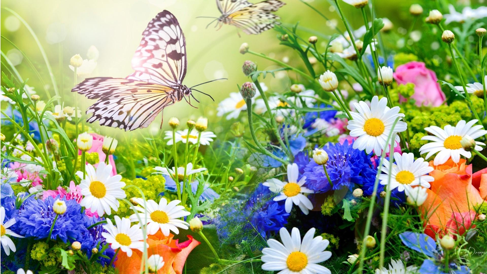 Colorful Summer Desktop Backgrounds: Summer Flower Backgrounds (54+ Pictures