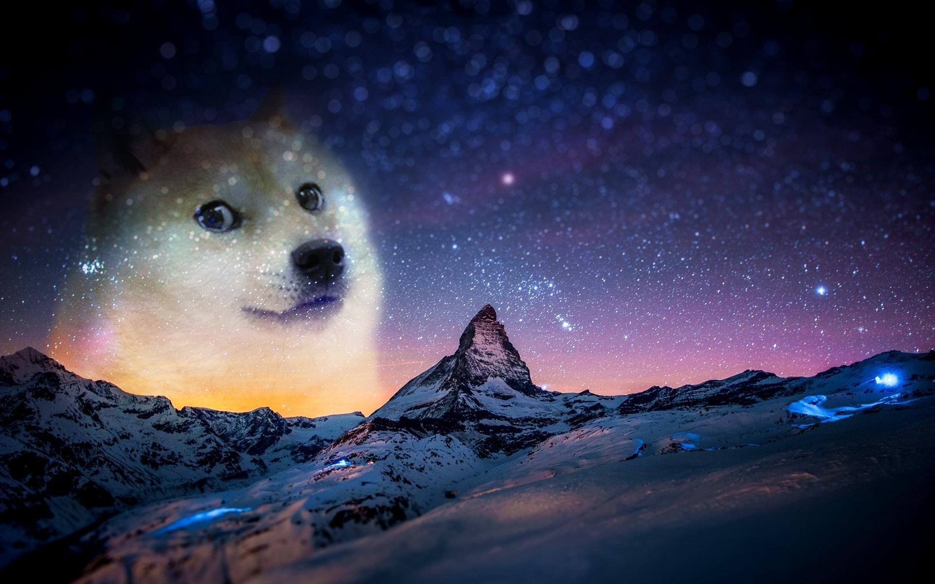 1920x1200 Doge Wallpaper High Quality