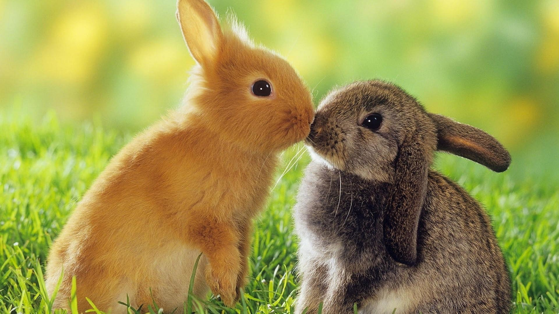 Baby Bunny Wallpaper 63 Pictures