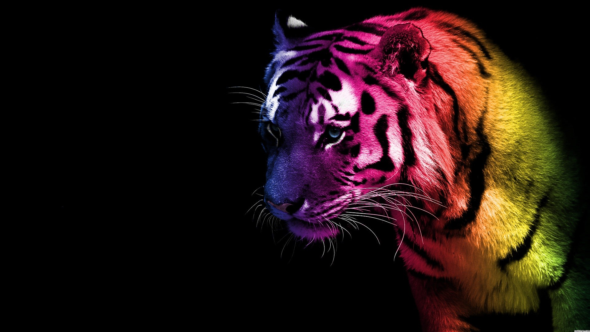 1920x1080 Auburn Tigers Live Wallpaper