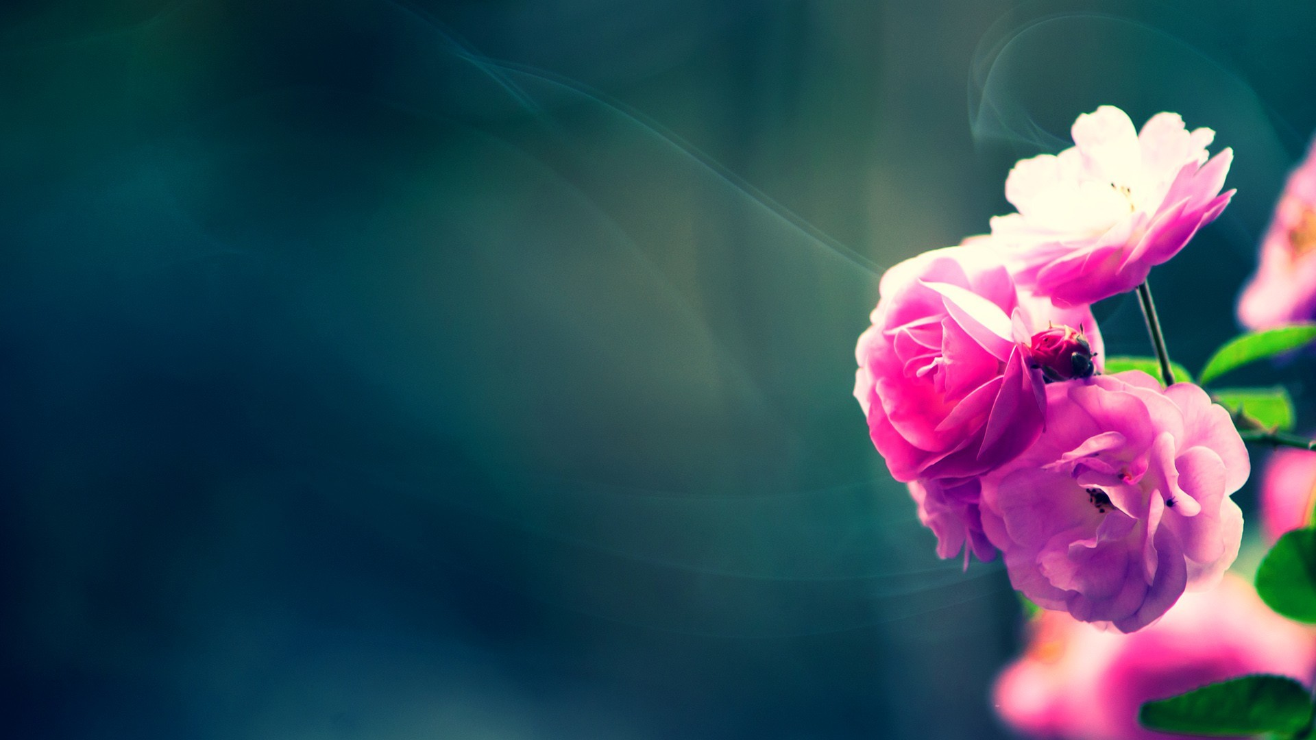 Hd Flower Wallpaper 75 Pictures