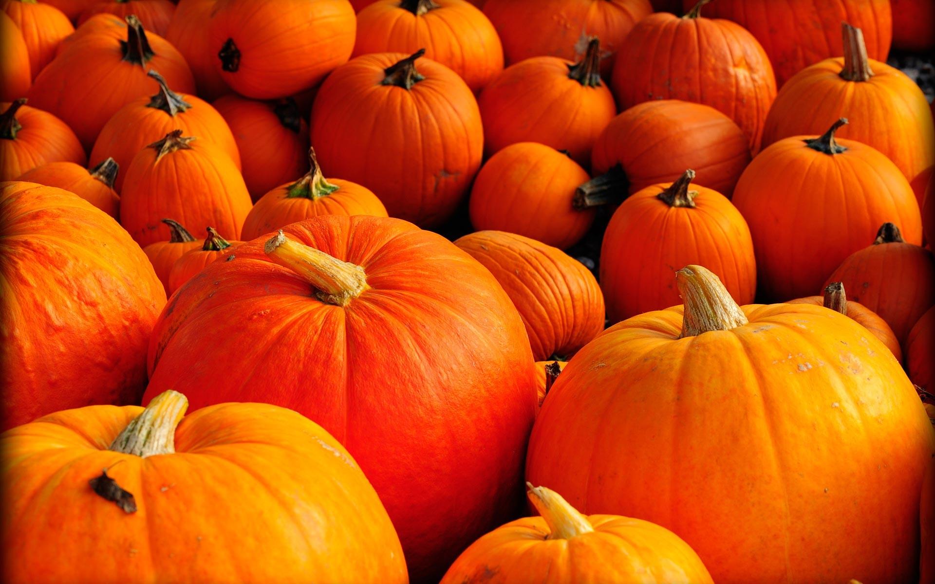 Pumpkin Wallpaper Backgrounds 57 Pictures