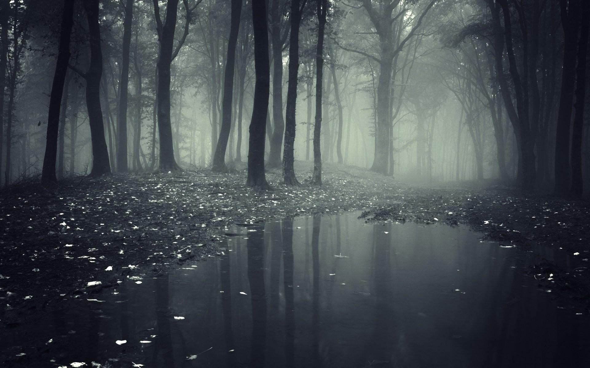 Dark Forest Wallpaper 74 Pictures