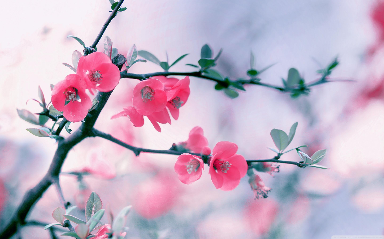 Spring Flowers Background Desktop 66 Pictures