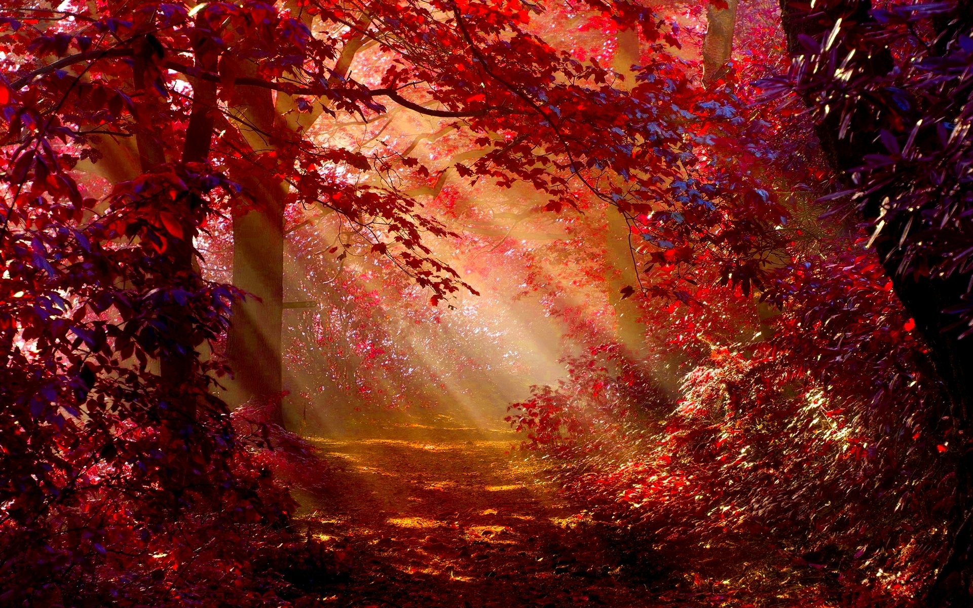 Autumn Forest Wallpaper 75 Pictures