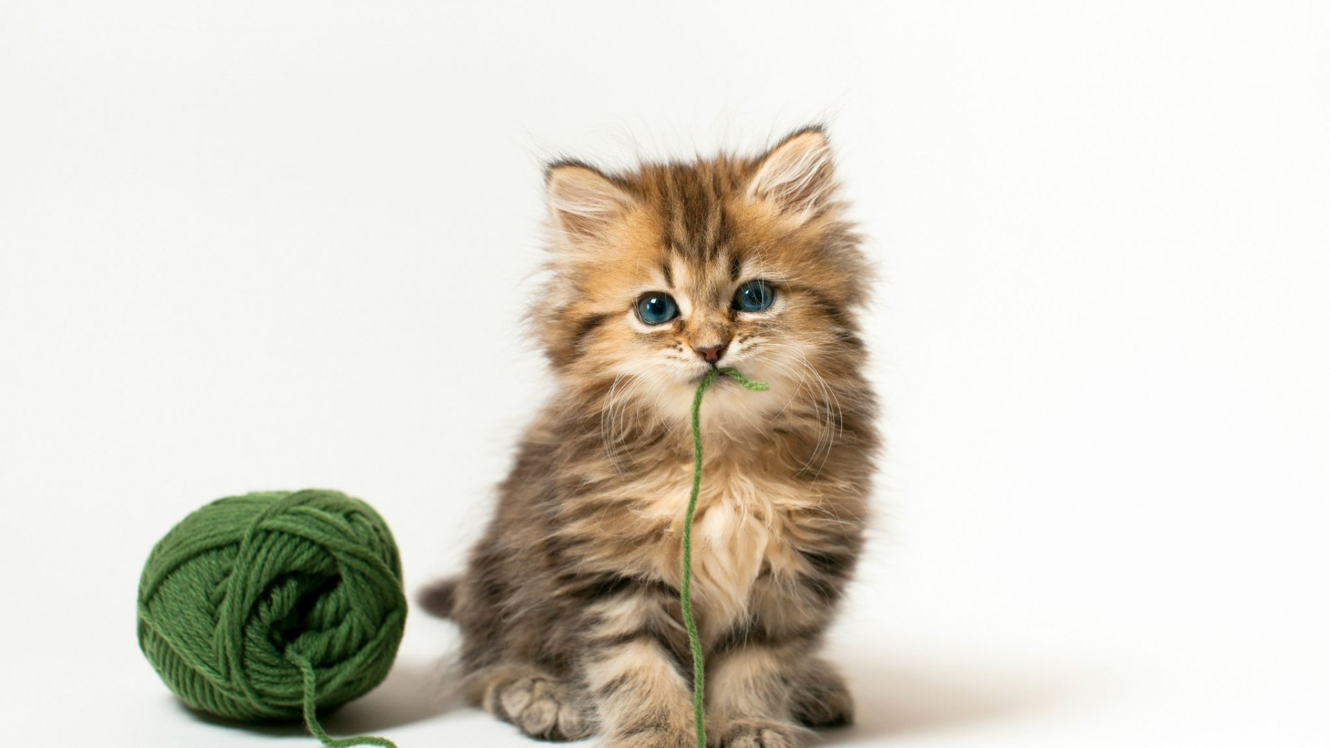 Kitten Wallpaper 77 Pictures