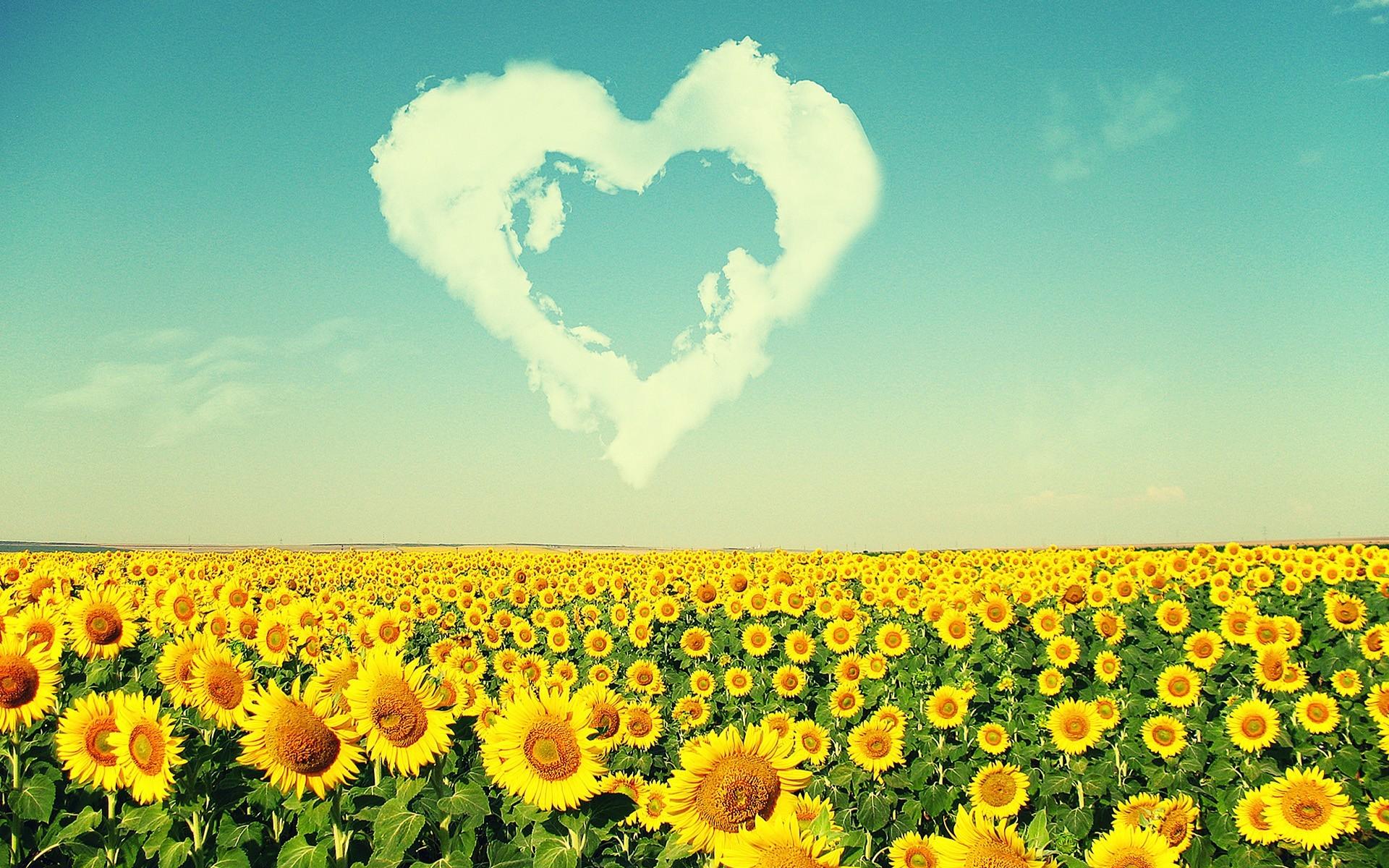 Sunflower Wallpaper Desktop 67 Pictures