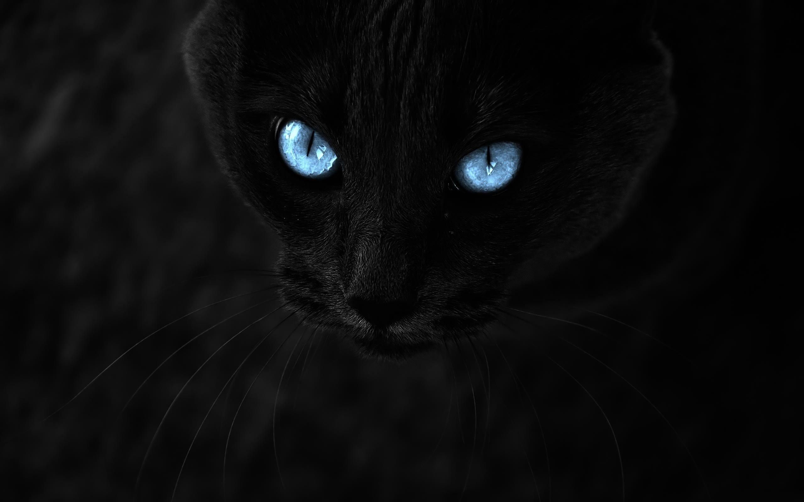 Black Cat With Blue Eyes 871579 2560x1600