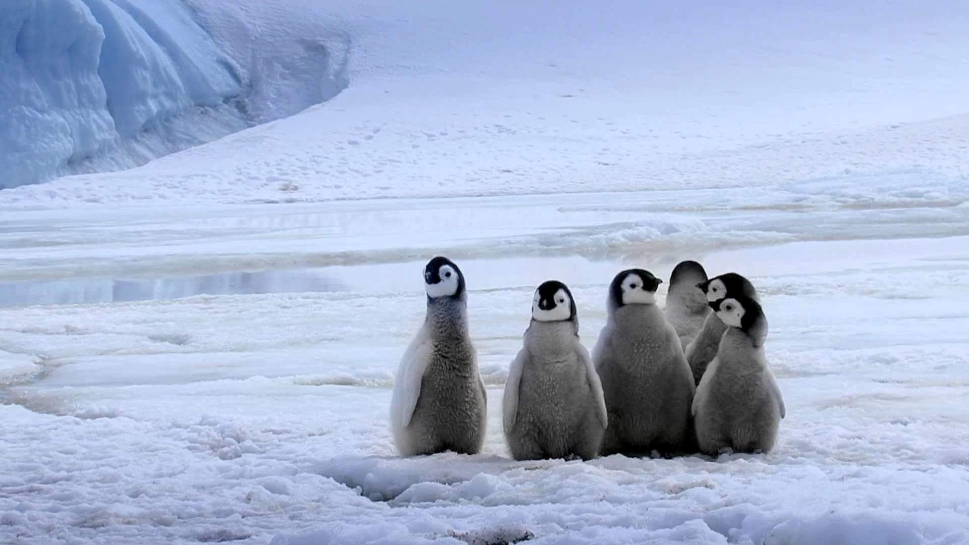 penguin wallpaper 60 pictures
