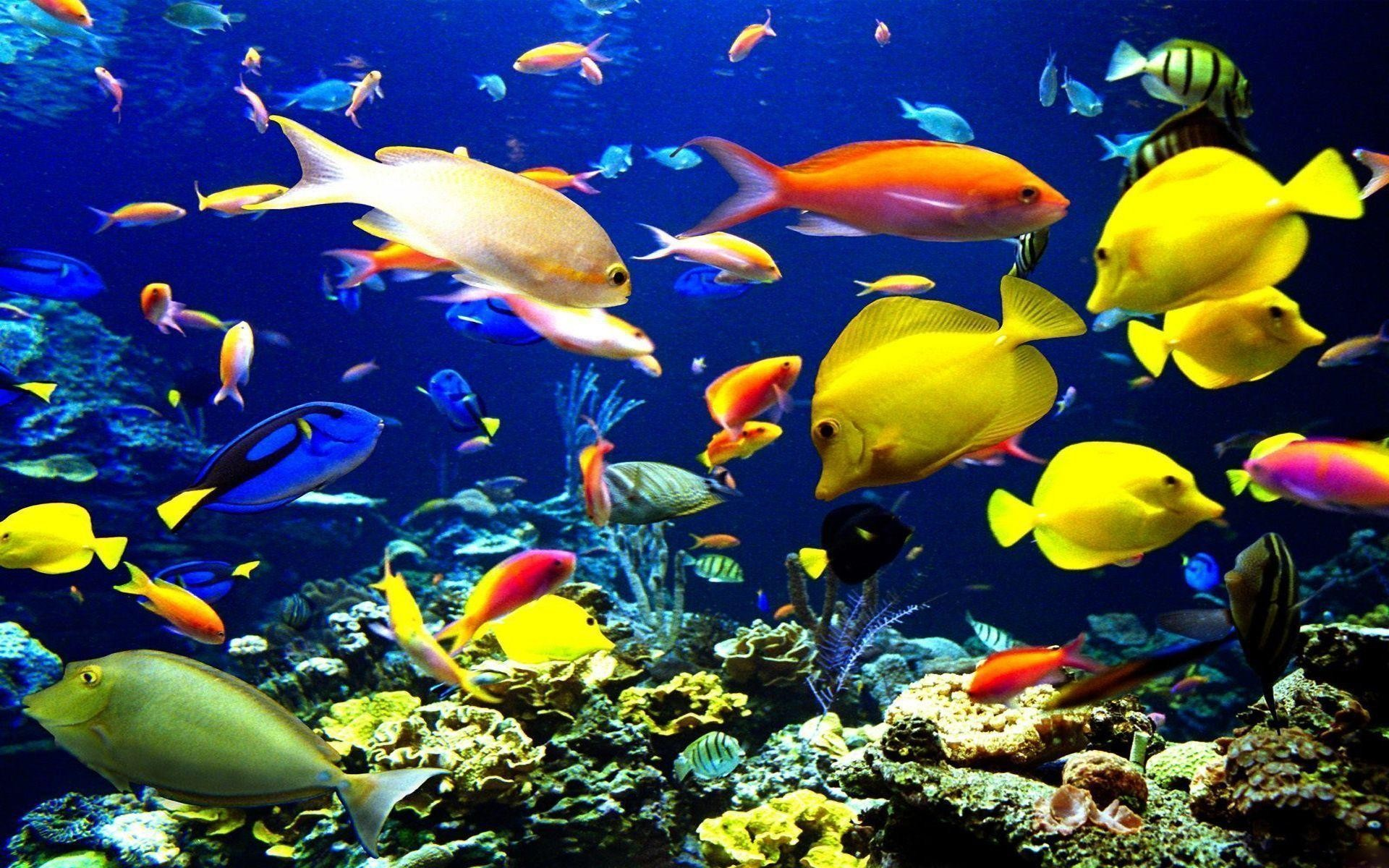 Fish Wallpapers 51 Pictures