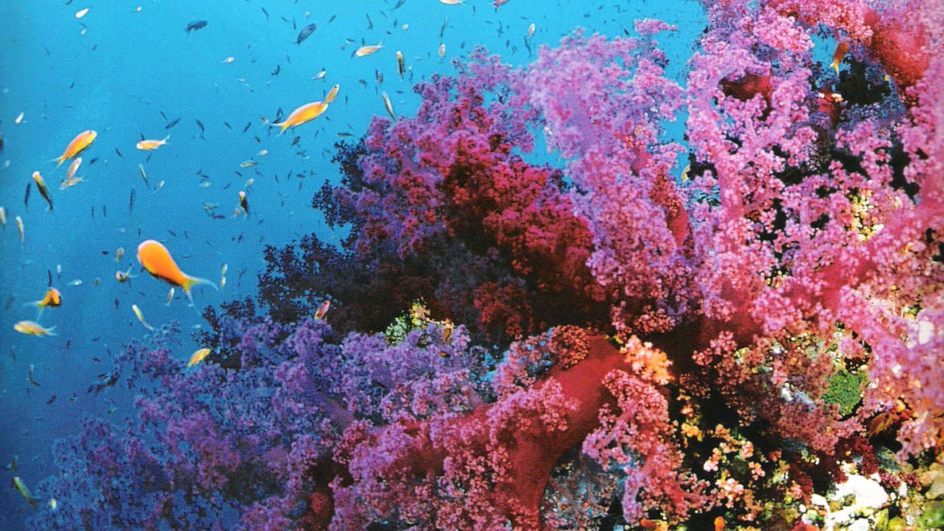 Coral Reef Background (56+ pictures)  Coral Reef Wallpaper 1920x1080