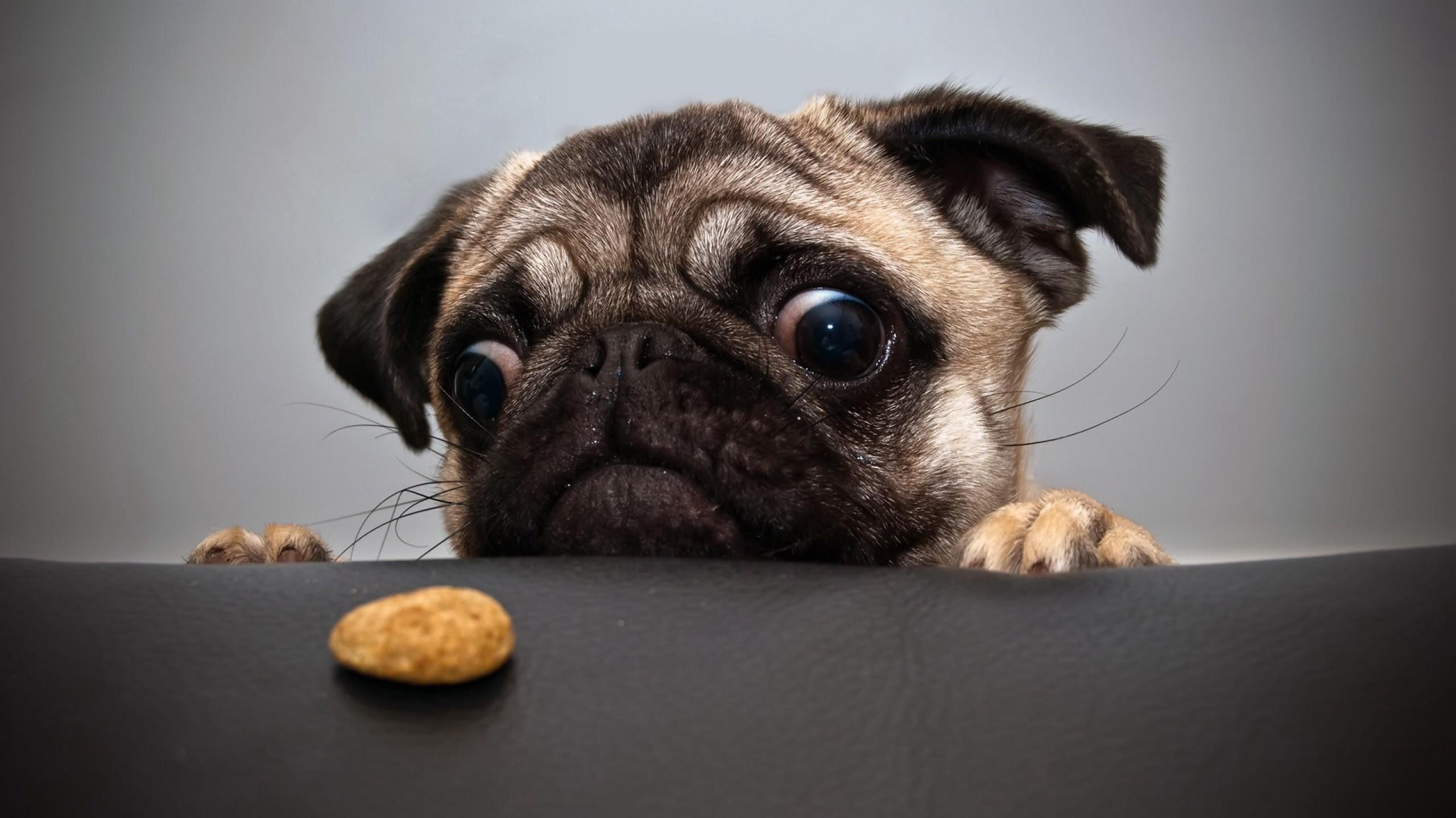 Dog Desktop Backgrounds 80 Pictures