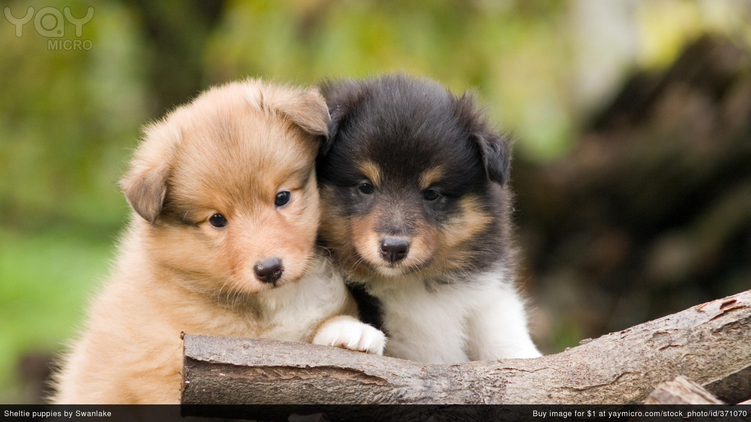 Cute Puppy Desktop Wallpaper 53 Pictures