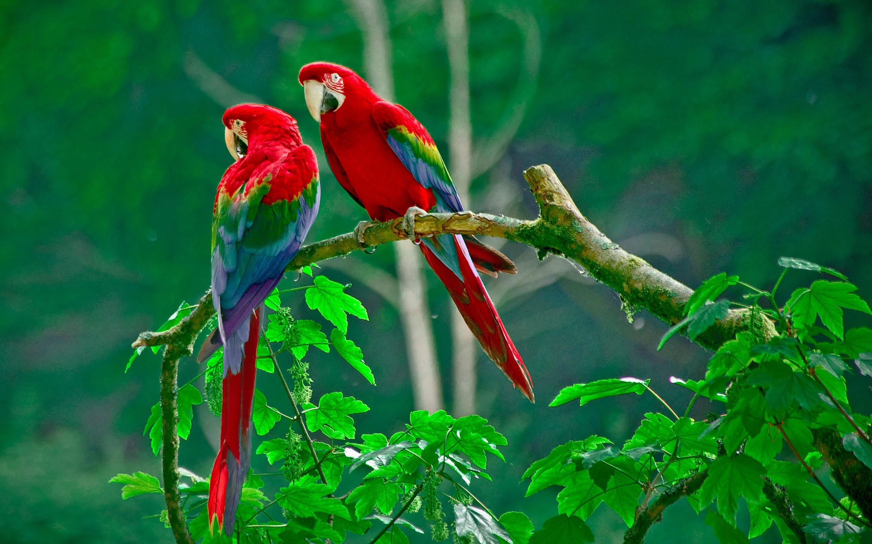 Birds Desktop Wallpaper 64 Pictures