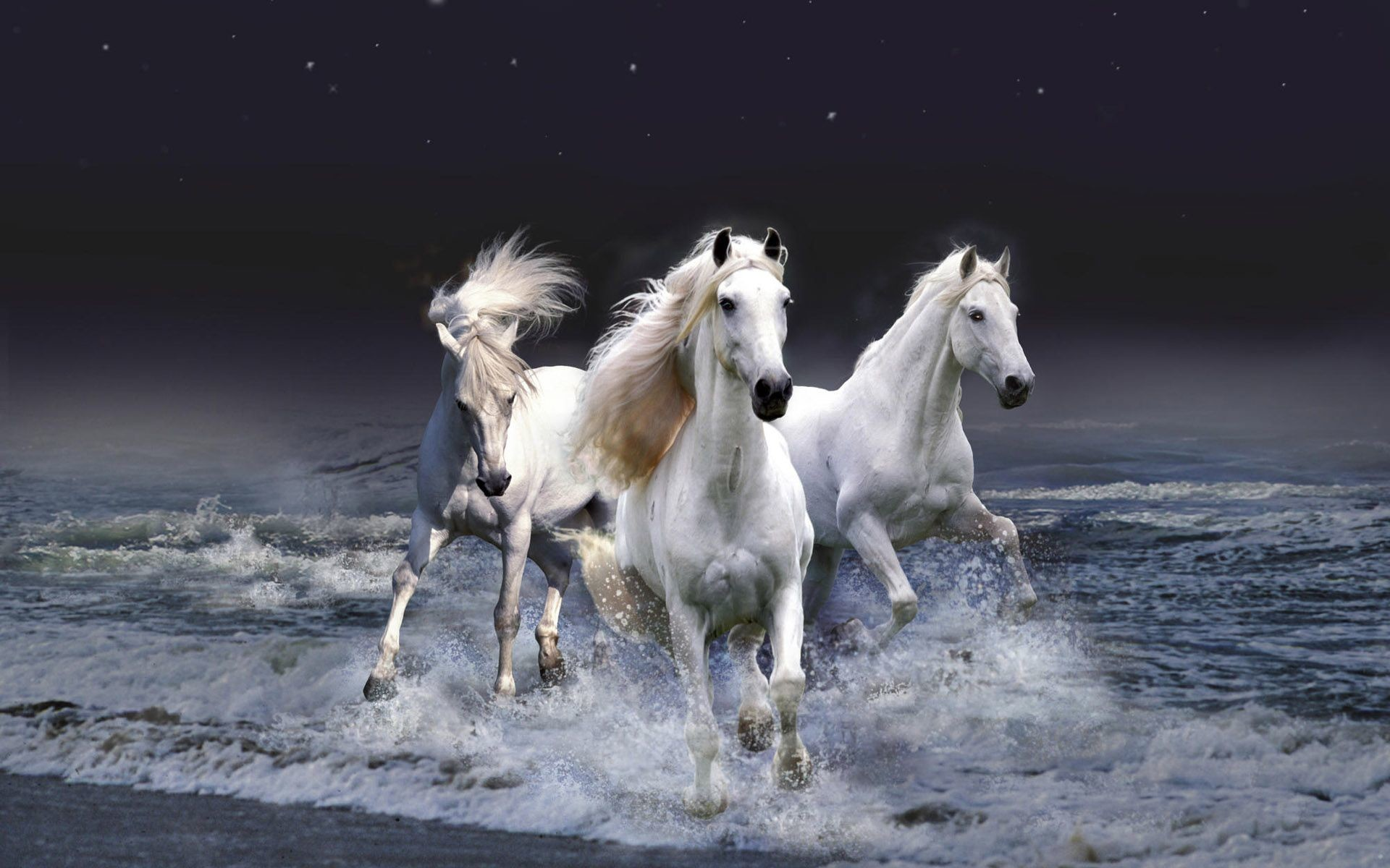 Wild Horse Wallpaper 66 Pictures