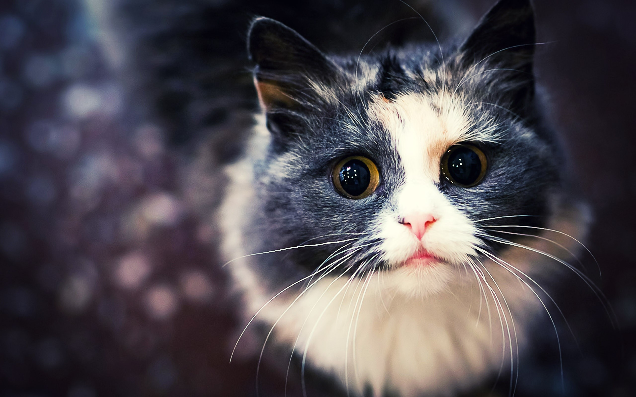 Cat Desktop Background 77 Pictures