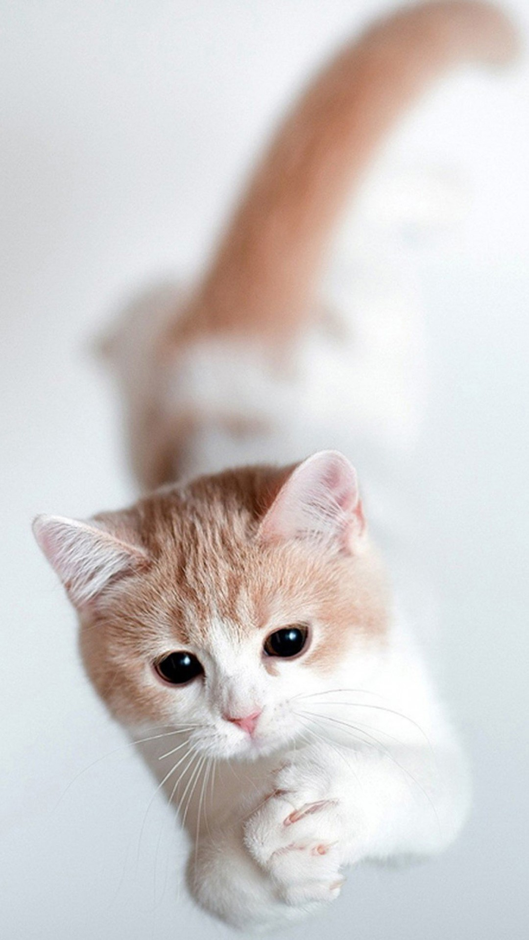 Cute Cat Wallpaper 71 Pictures
