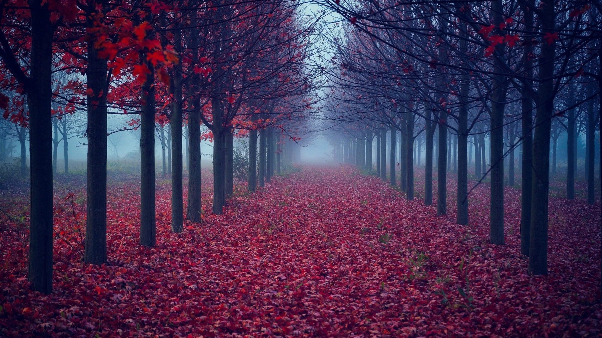 1920x1200 Wallpaperwiki Autumn Forest Background Download Free PIC