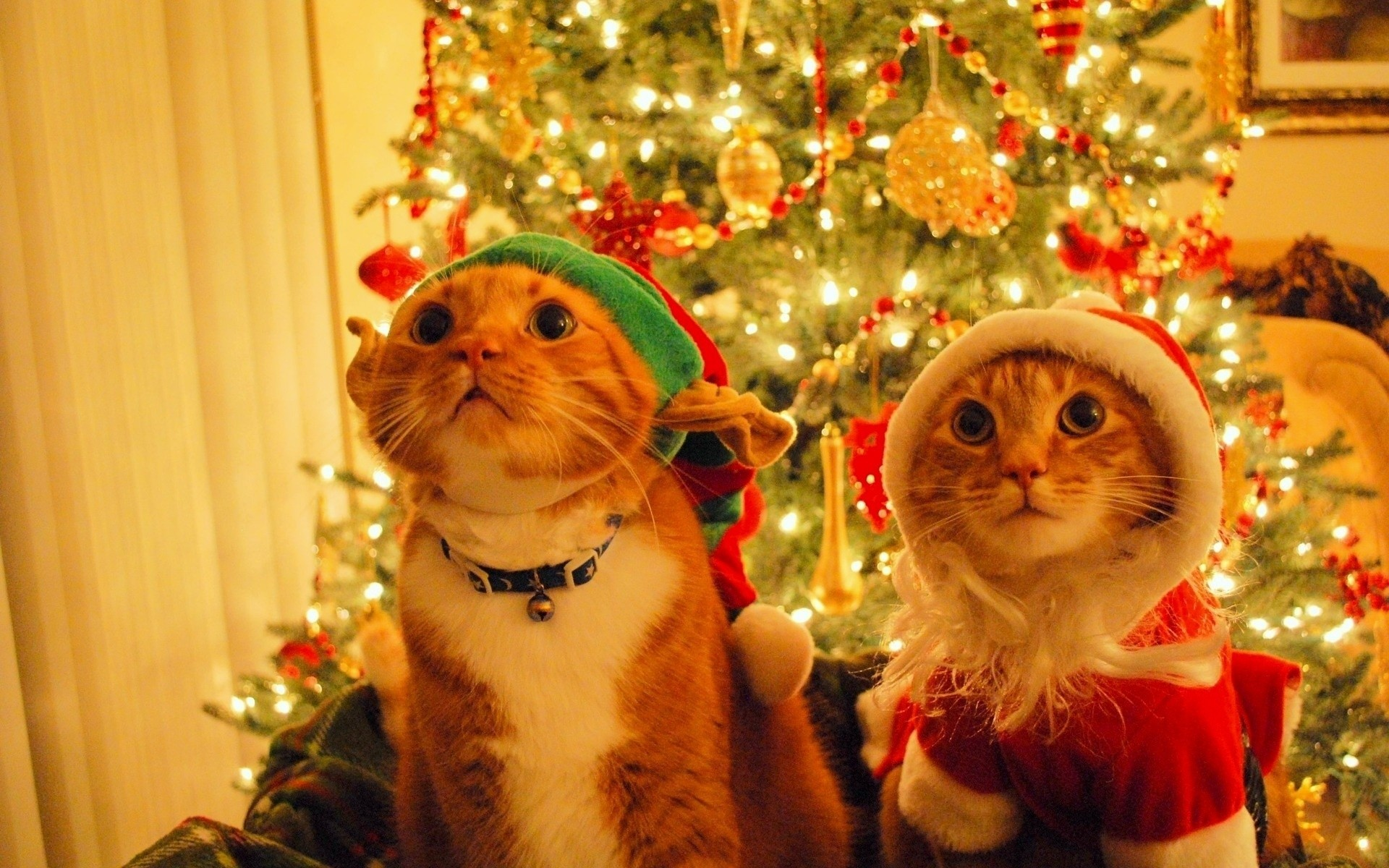 Funny Christmas Desktop Backgrounds 60 Pictures
