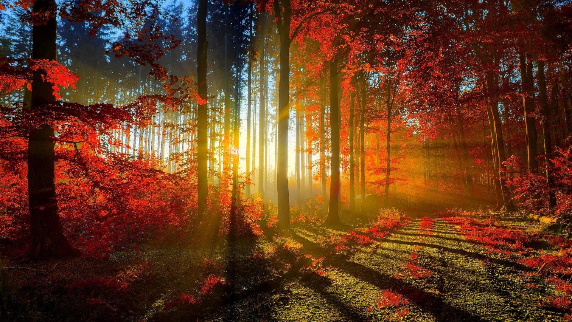 Nature Backgrounds Desktop (61+ pictures)