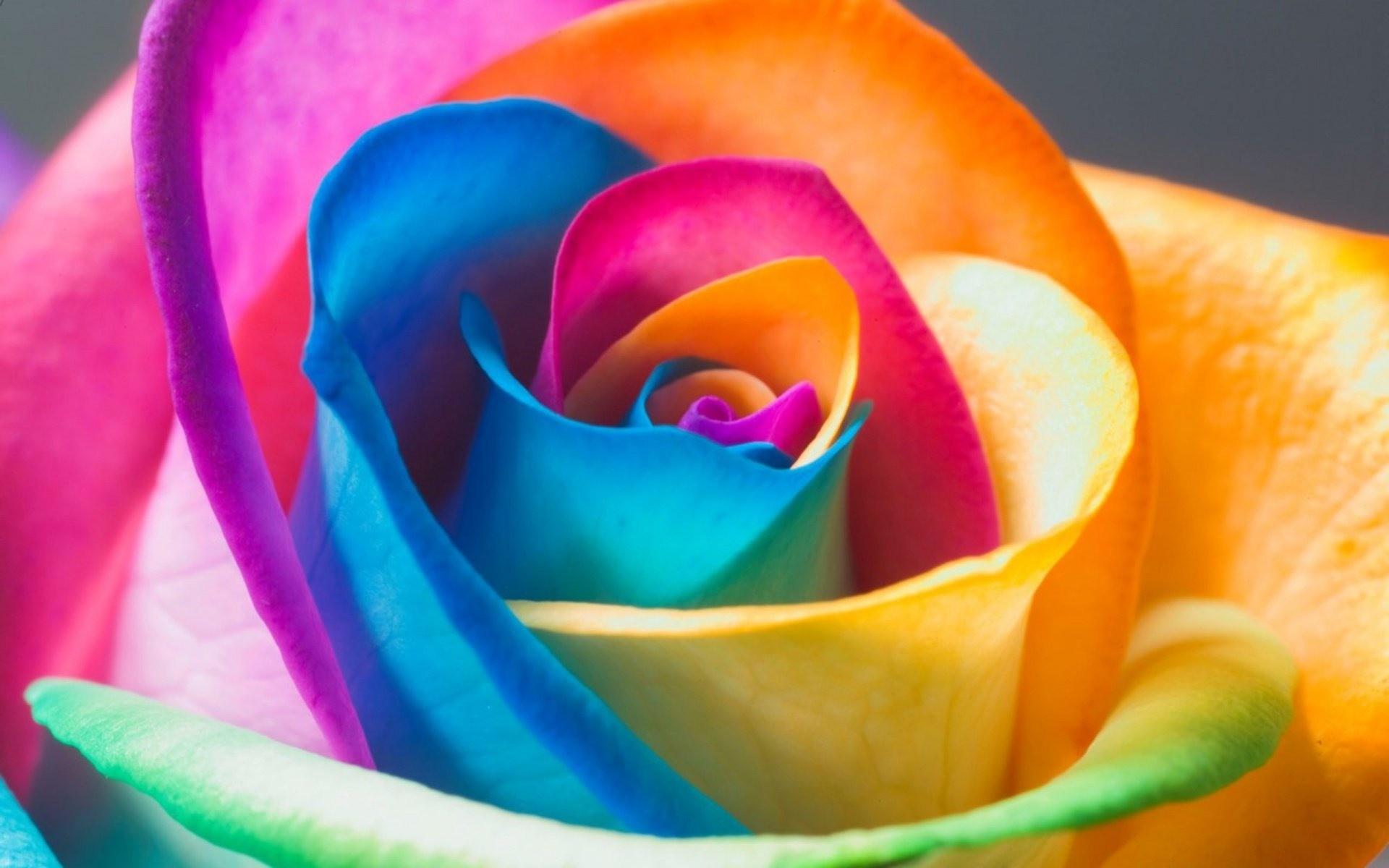 1920x1200 Rainbow Flower Wallpaper Desktop Hd On WallpaperGet