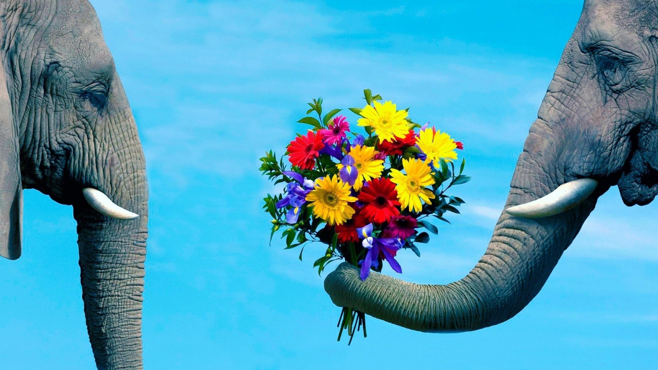 Elephant Desktop Backgrounds 70 Pictures