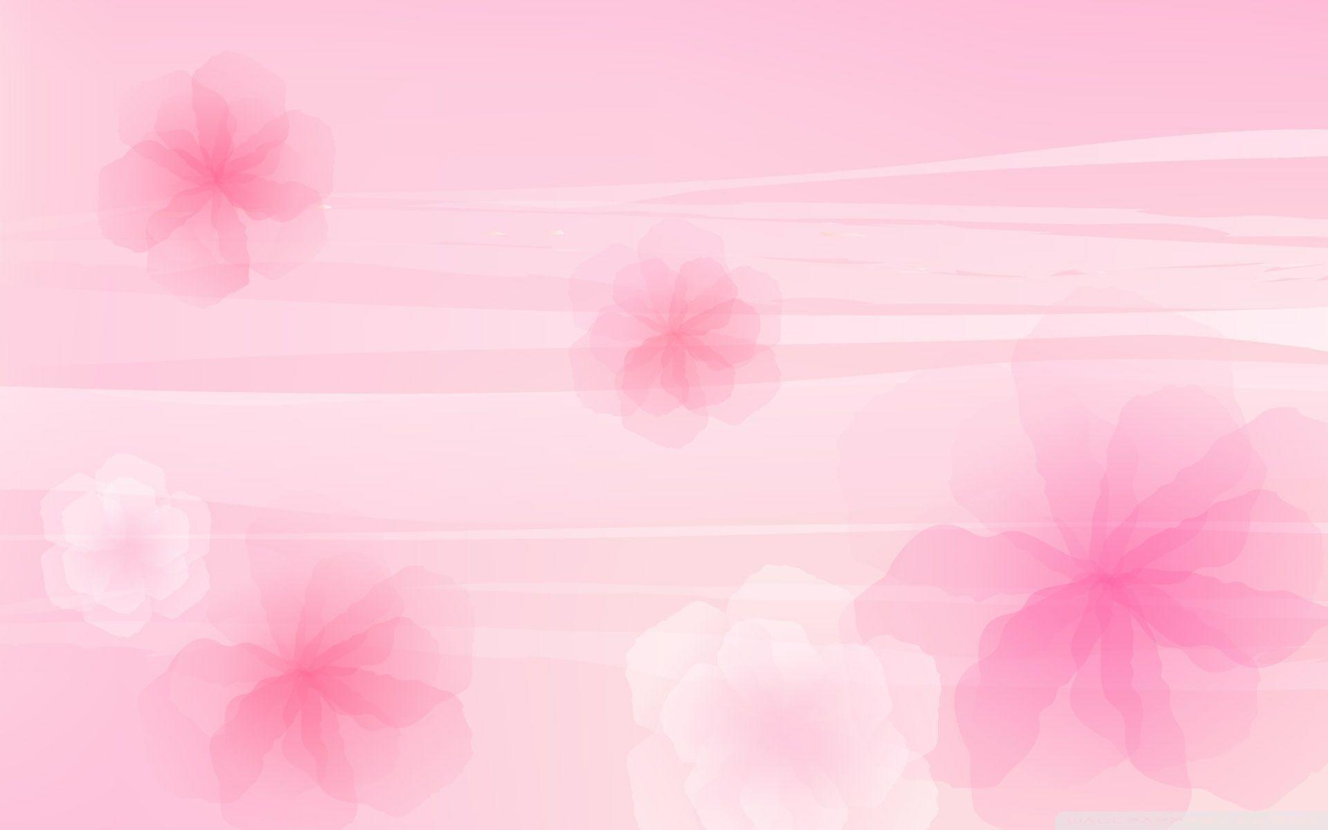 Light Pink Flower Wallpaper 58 Pictures