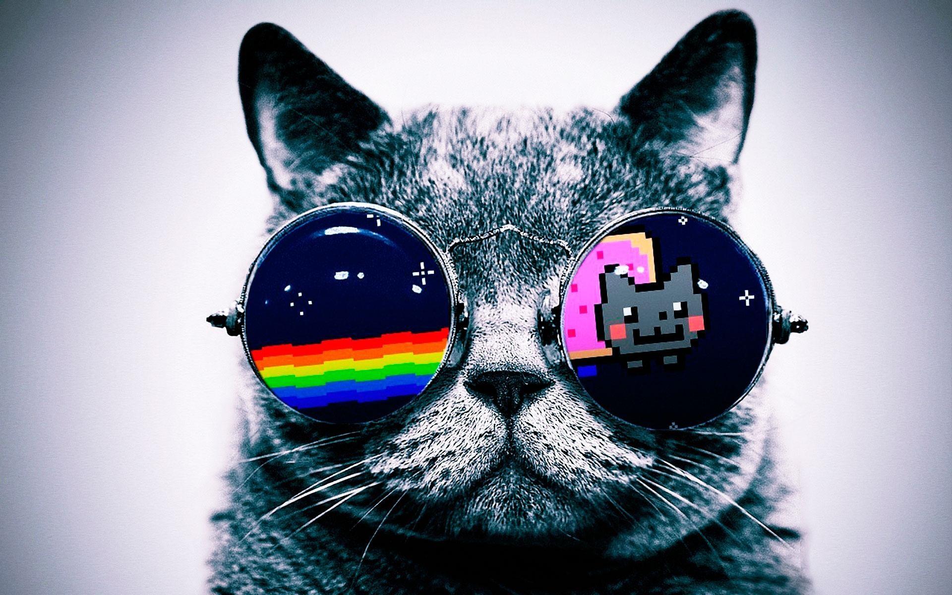 It's A Cool Cat 1920x1200