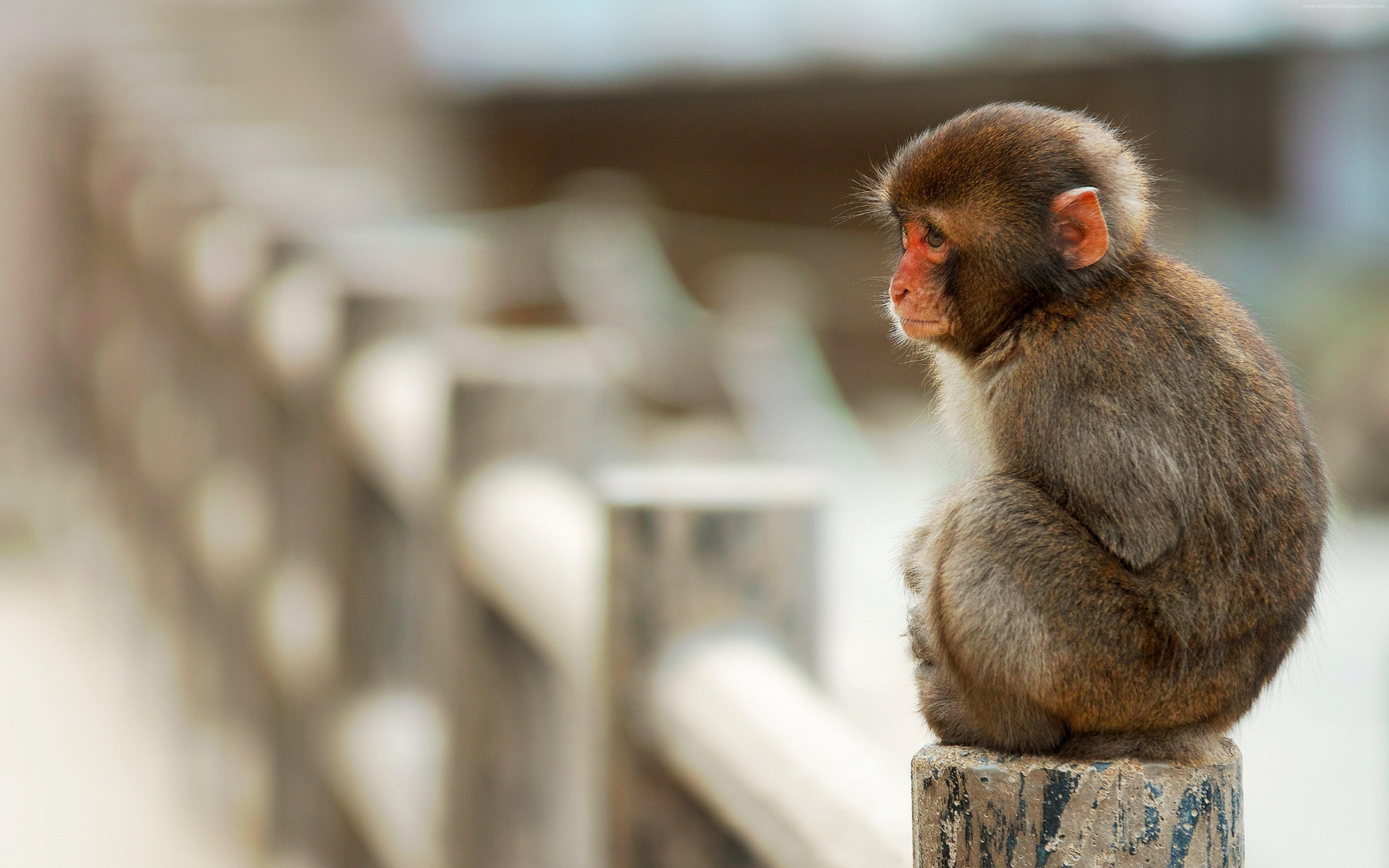 Charming Monkey Baby HD