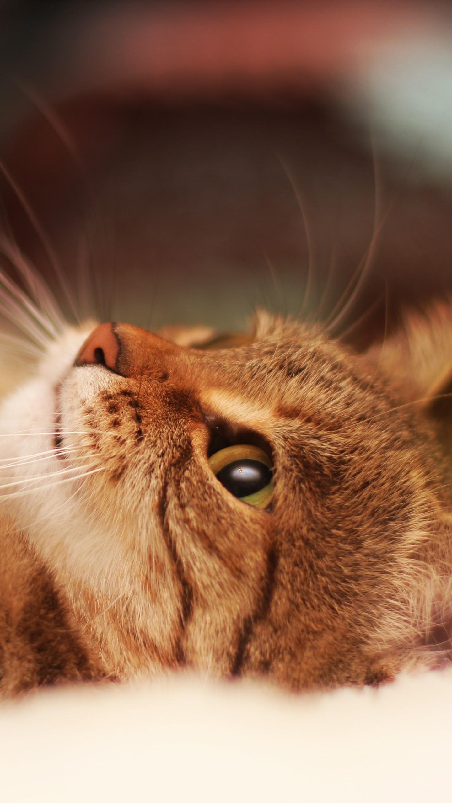 1440x2560 Wallpaper cat, lying, cool cat, beautiful cat 1440x2560