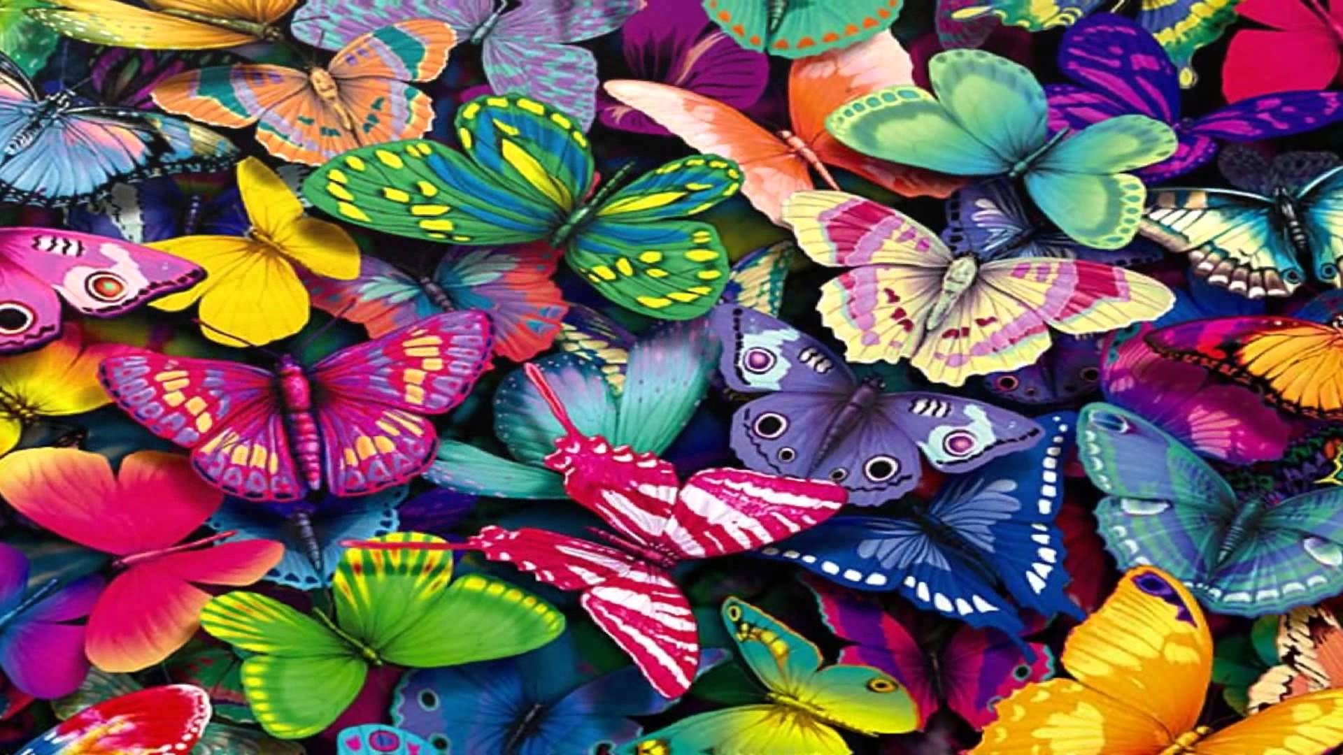 Butterfly Wallpaper Hd 77 Pictures
