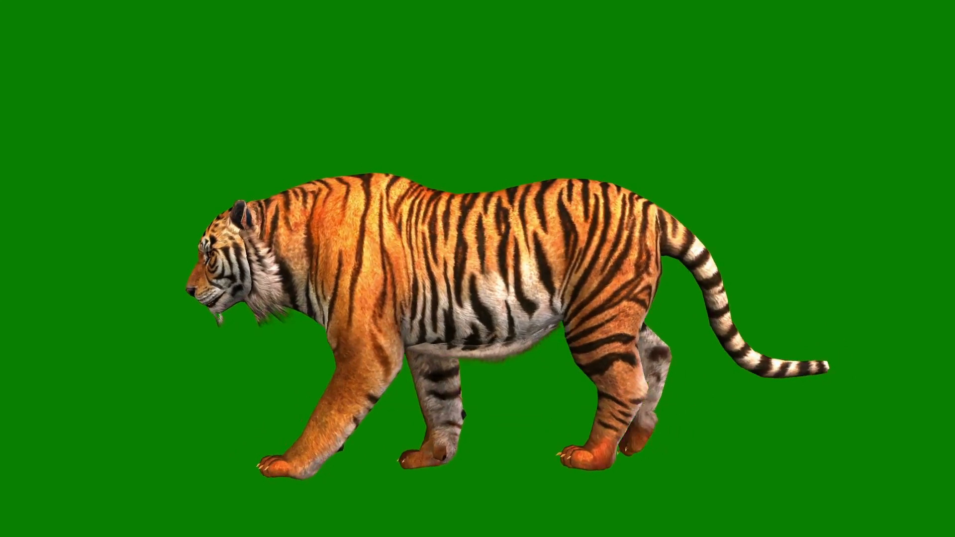 Tiger Background Pictures 70 Pictures