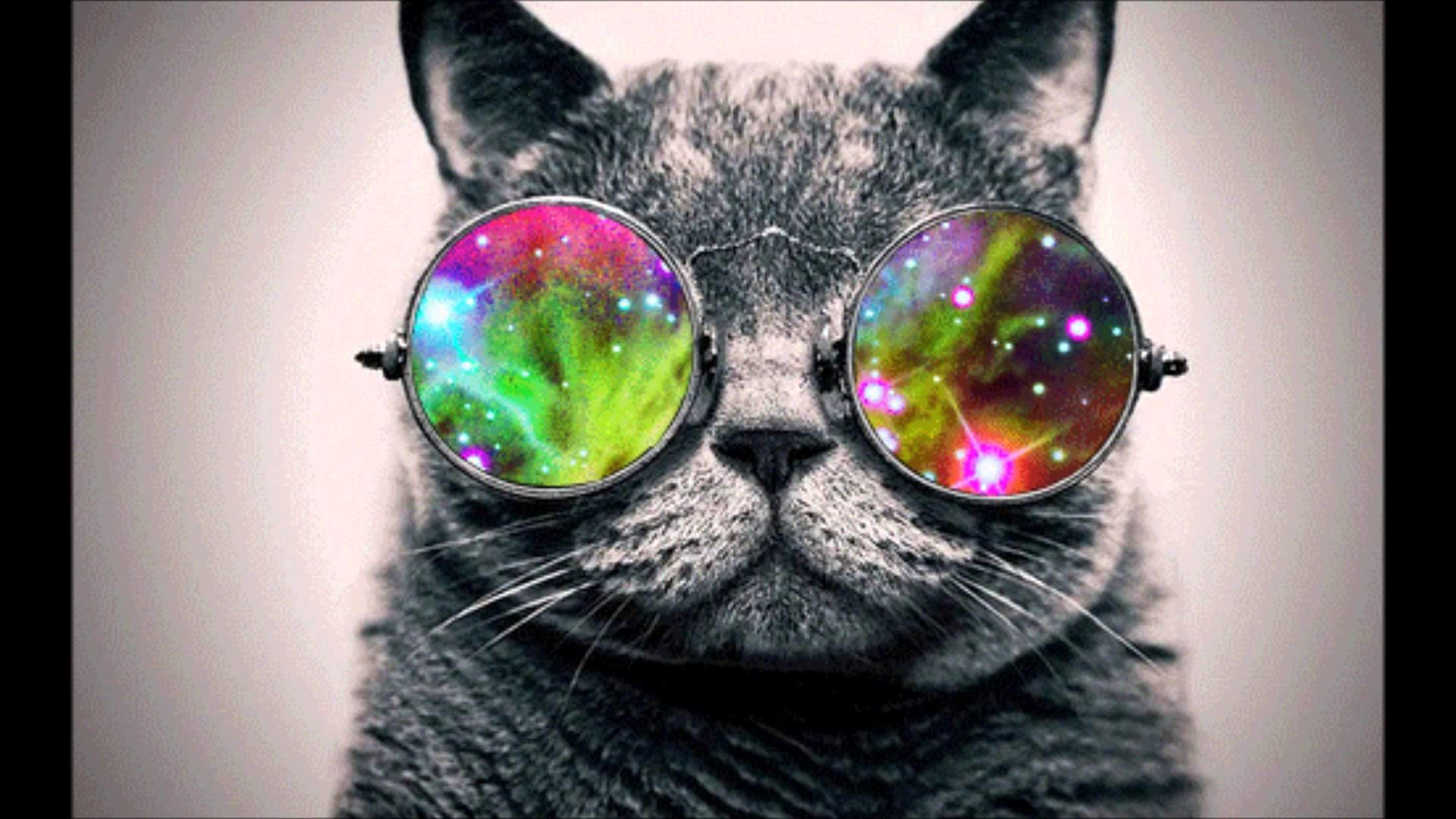 Cool Cat with Glasses 1920x1080