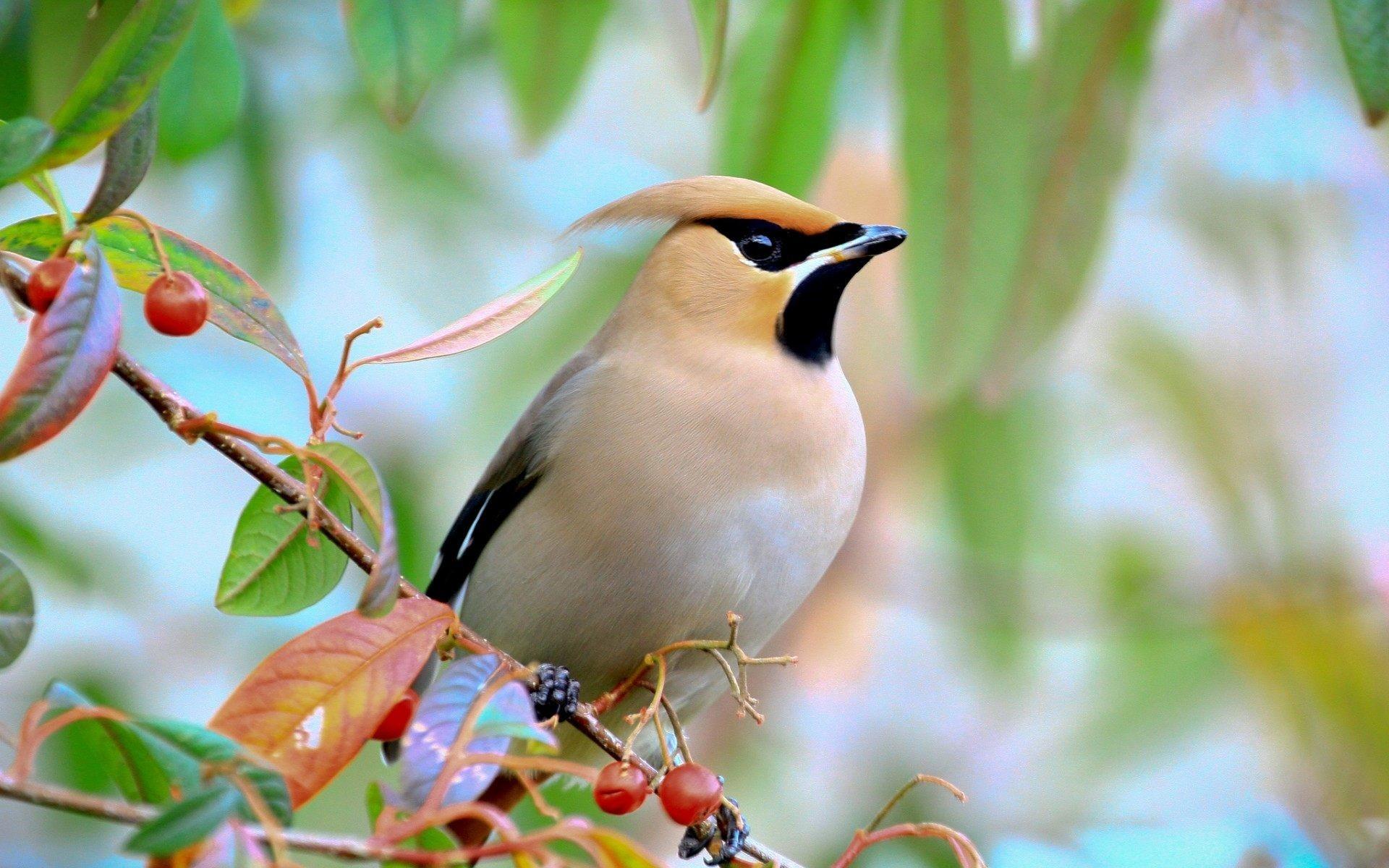 Bird Desktop Wallpaper 73 Pictures