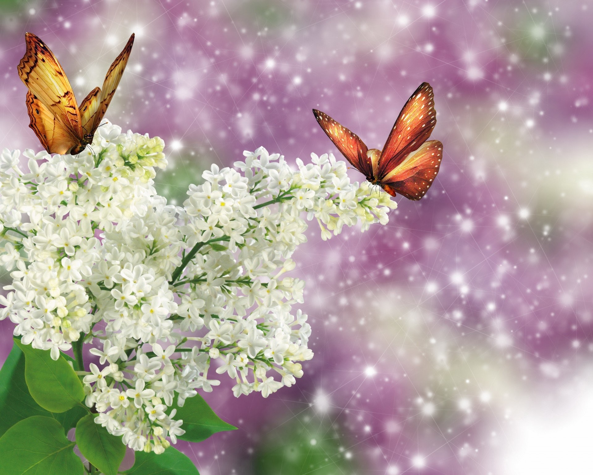 Fantasy butterfly wallpaper 65 pictures for Lilac butterfly wallpaper