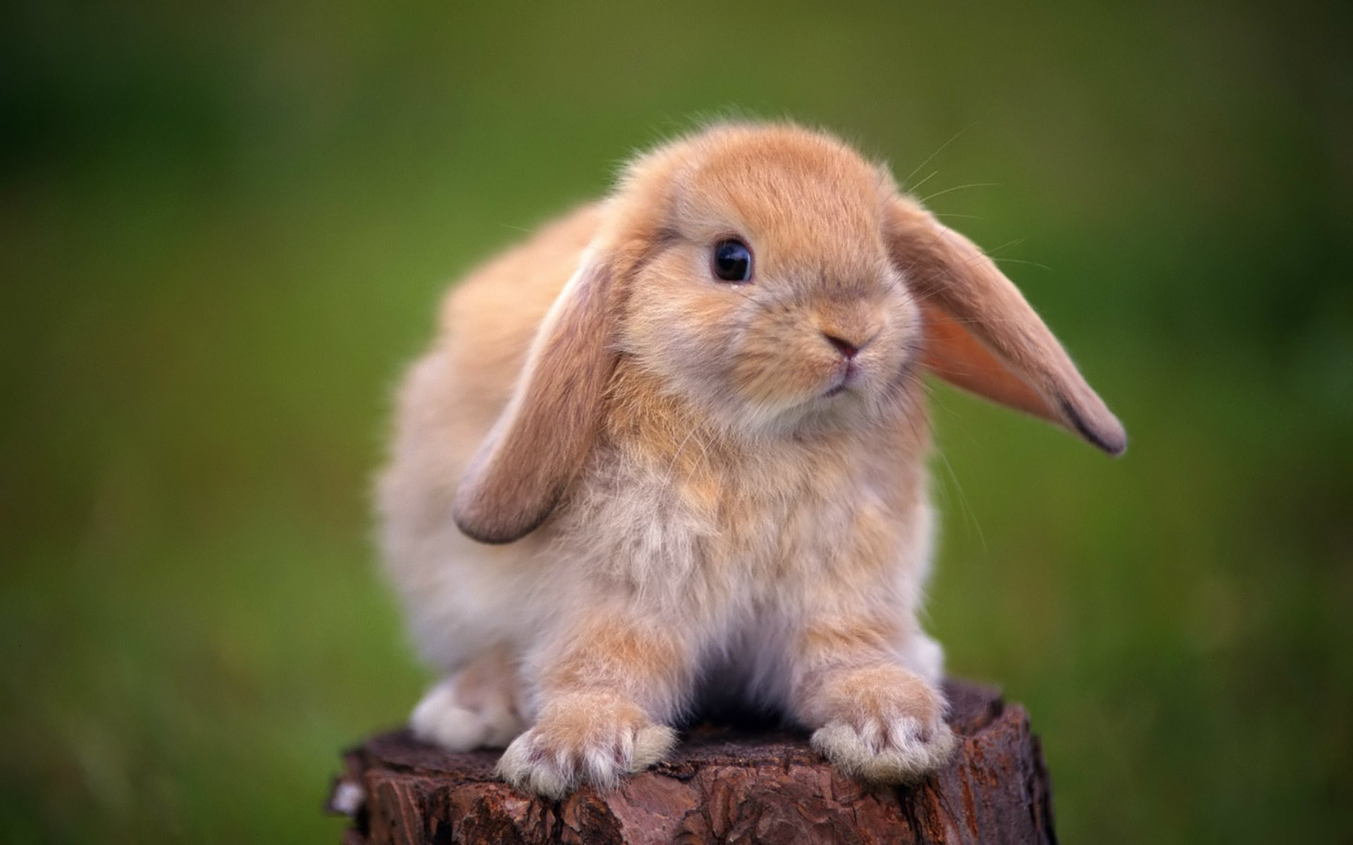Baby Bunny Wallpapers 67 Pictures