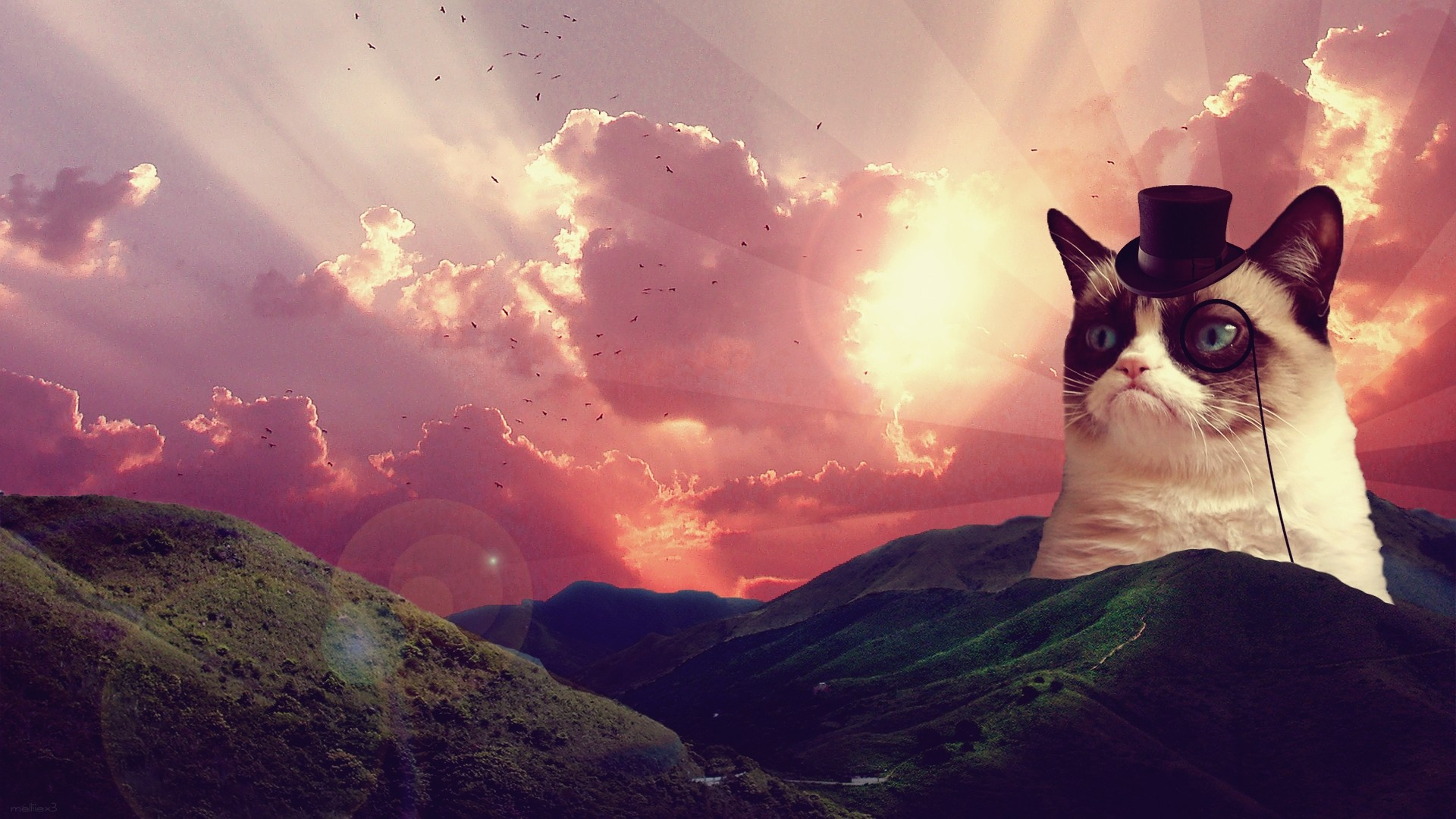 Cat Backgrounds Tumblr 1920x1080