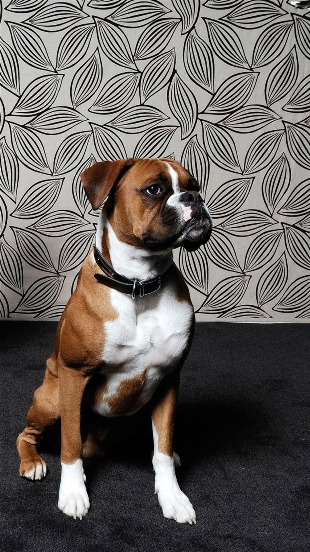 boxer dog wallpaper 51 pictures