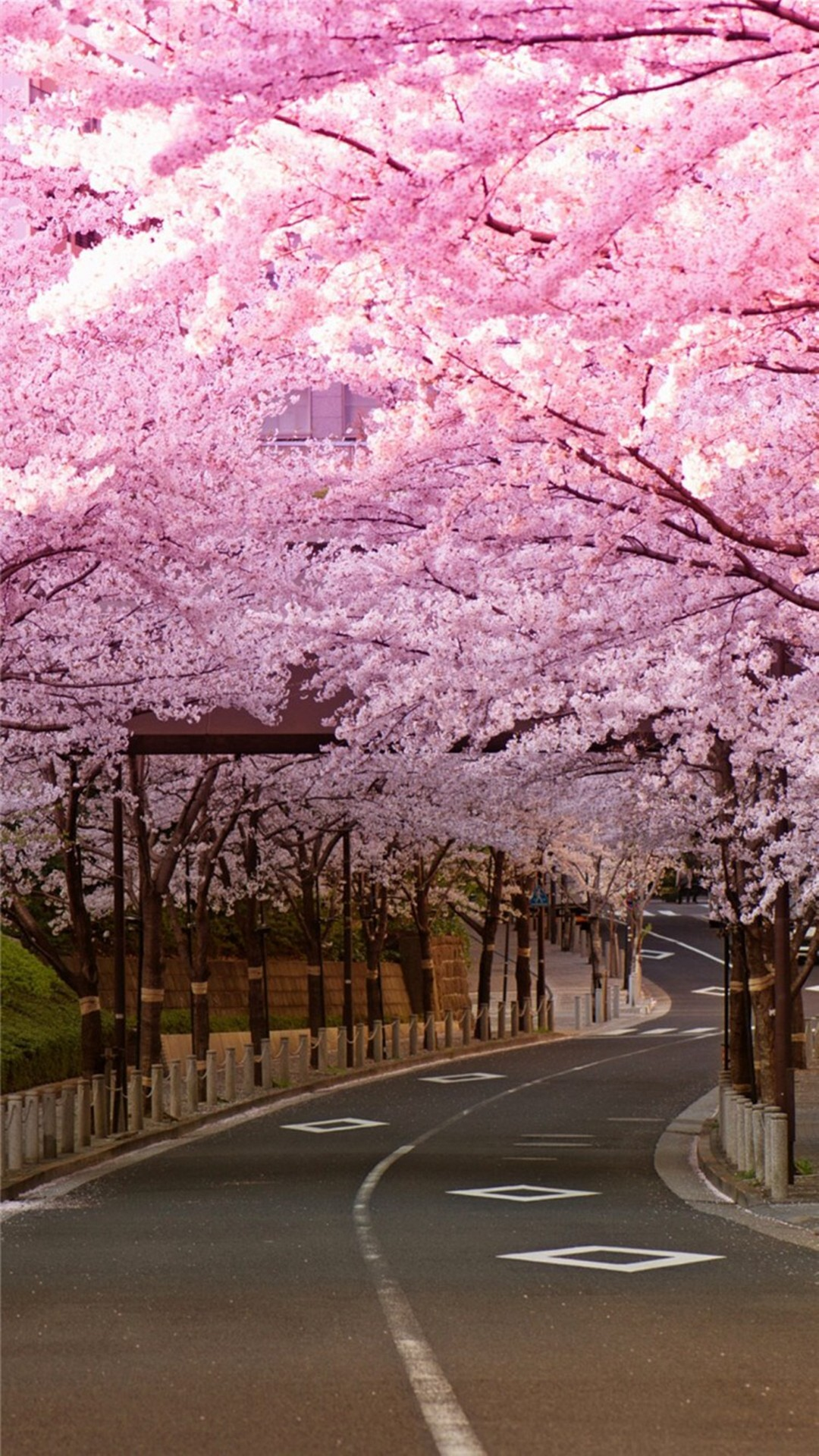 Cherry Blossom Wallpapers (73+ pictures)