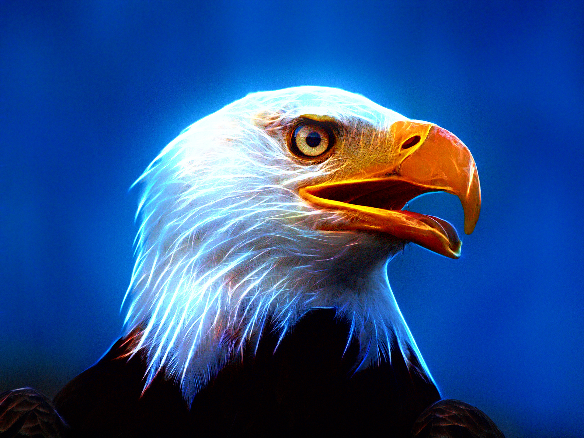 American Bald Eagle Wallpaper (58+ pictures)