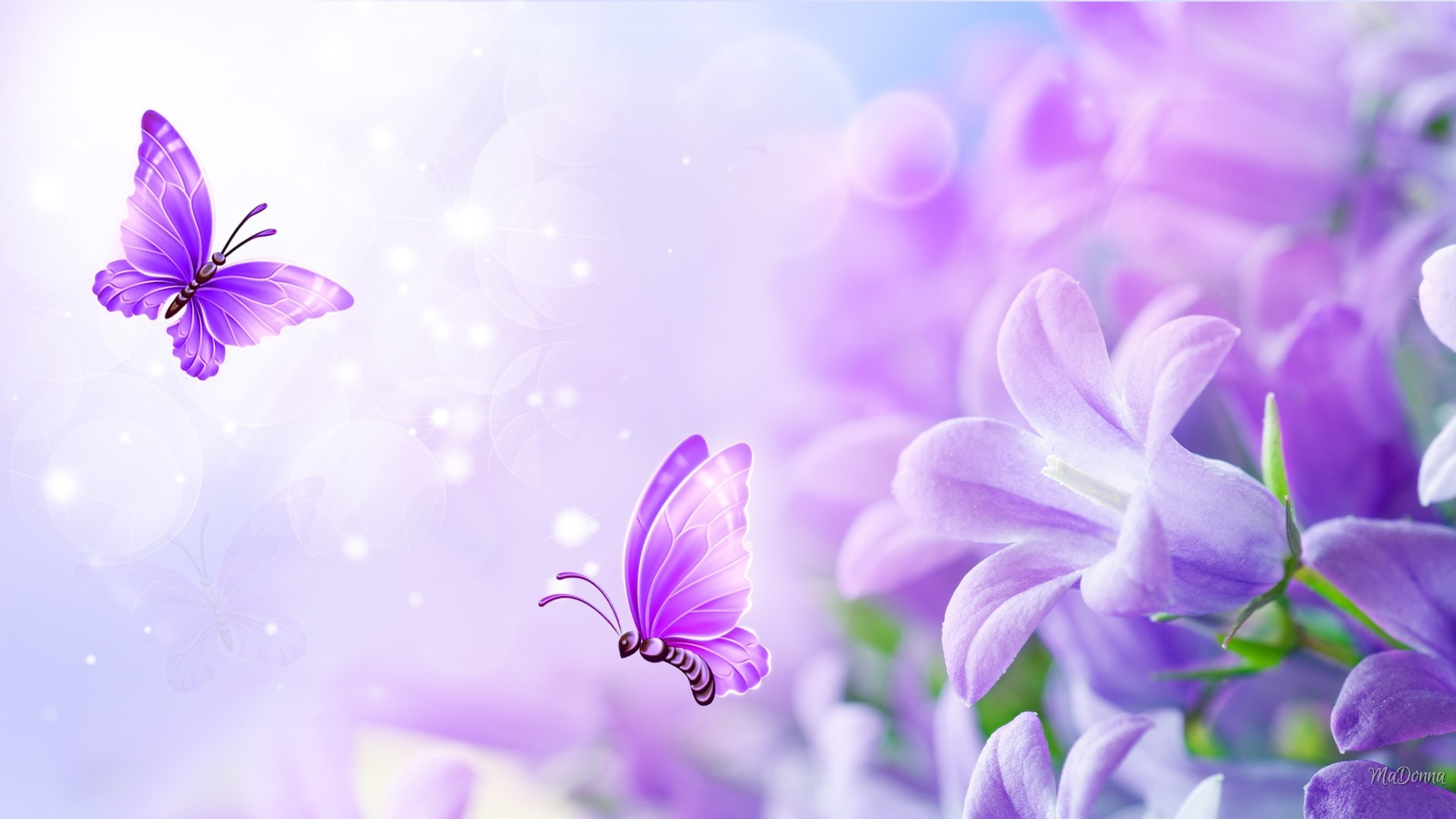 Lavender Flower Wallpaper (70+ pictures)