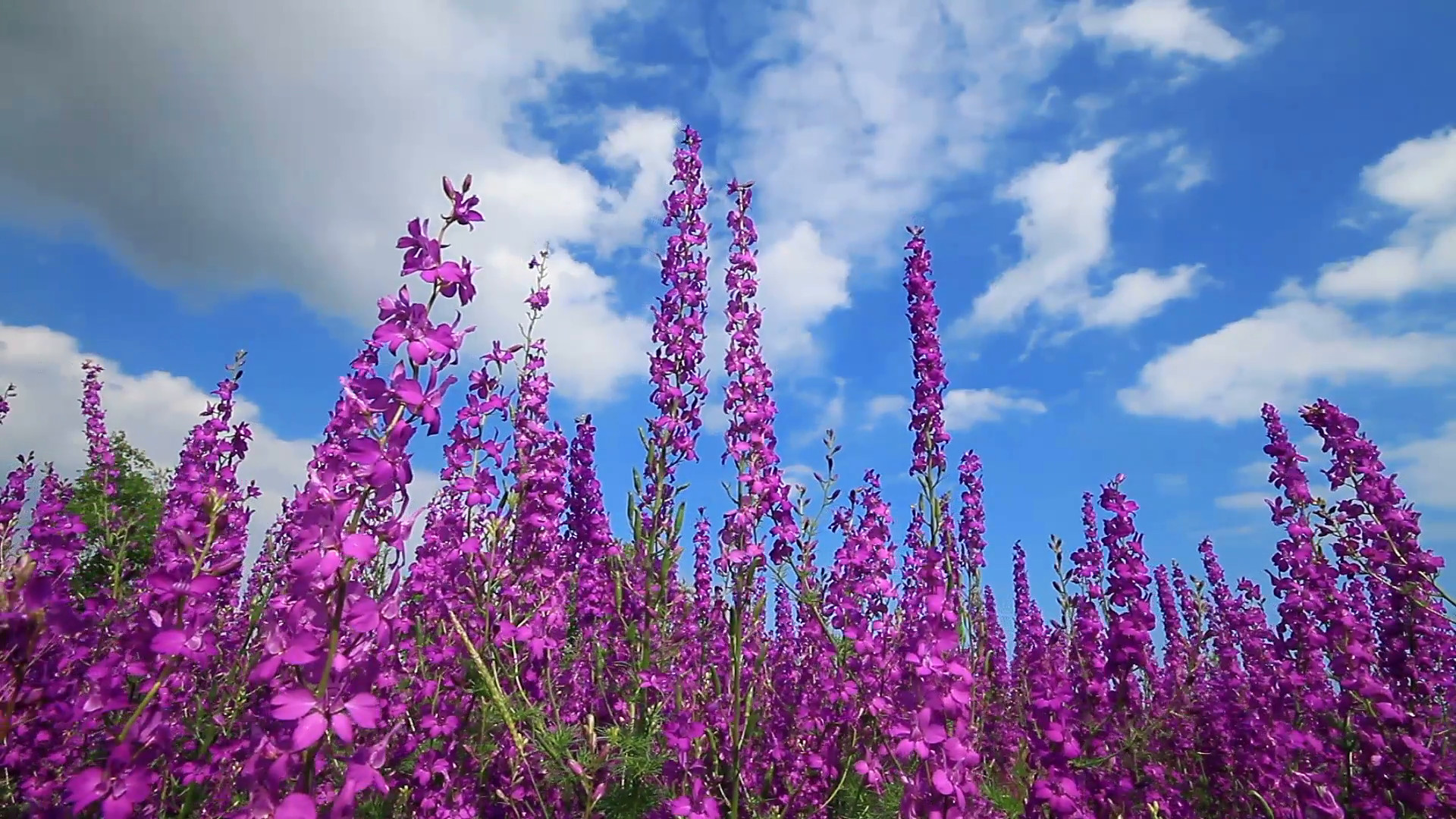 Pink and Purple Flower Backgrounds (59+ pictures)