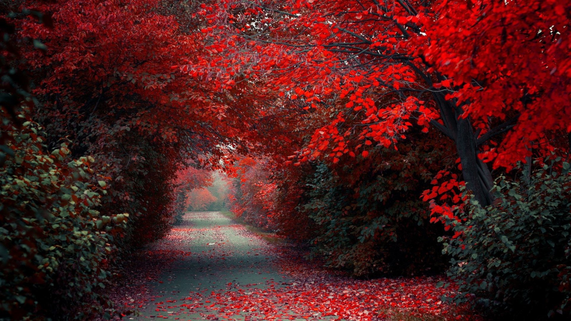 Red Nature Wallpaper 68 Pictures