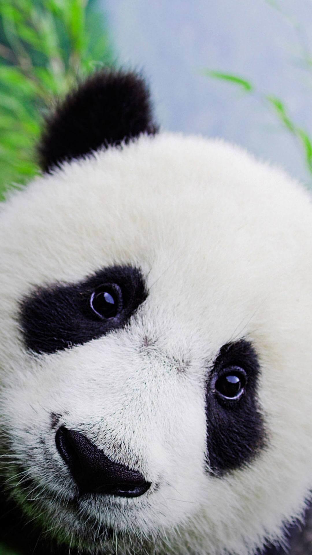 Cute Panda Wallpapers (64+ pictures)