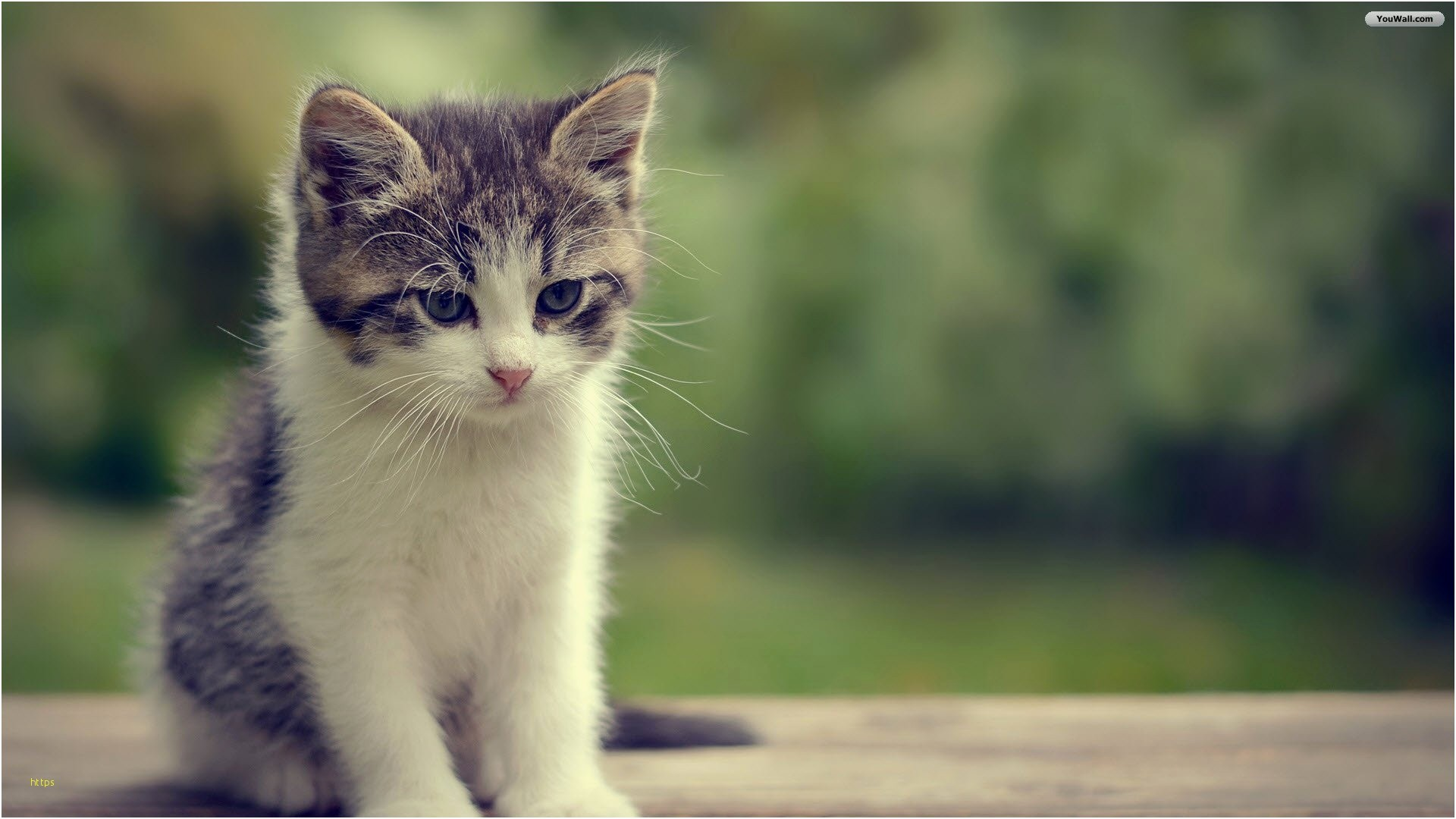 Cute Animal Wallpapers 76 Pictures