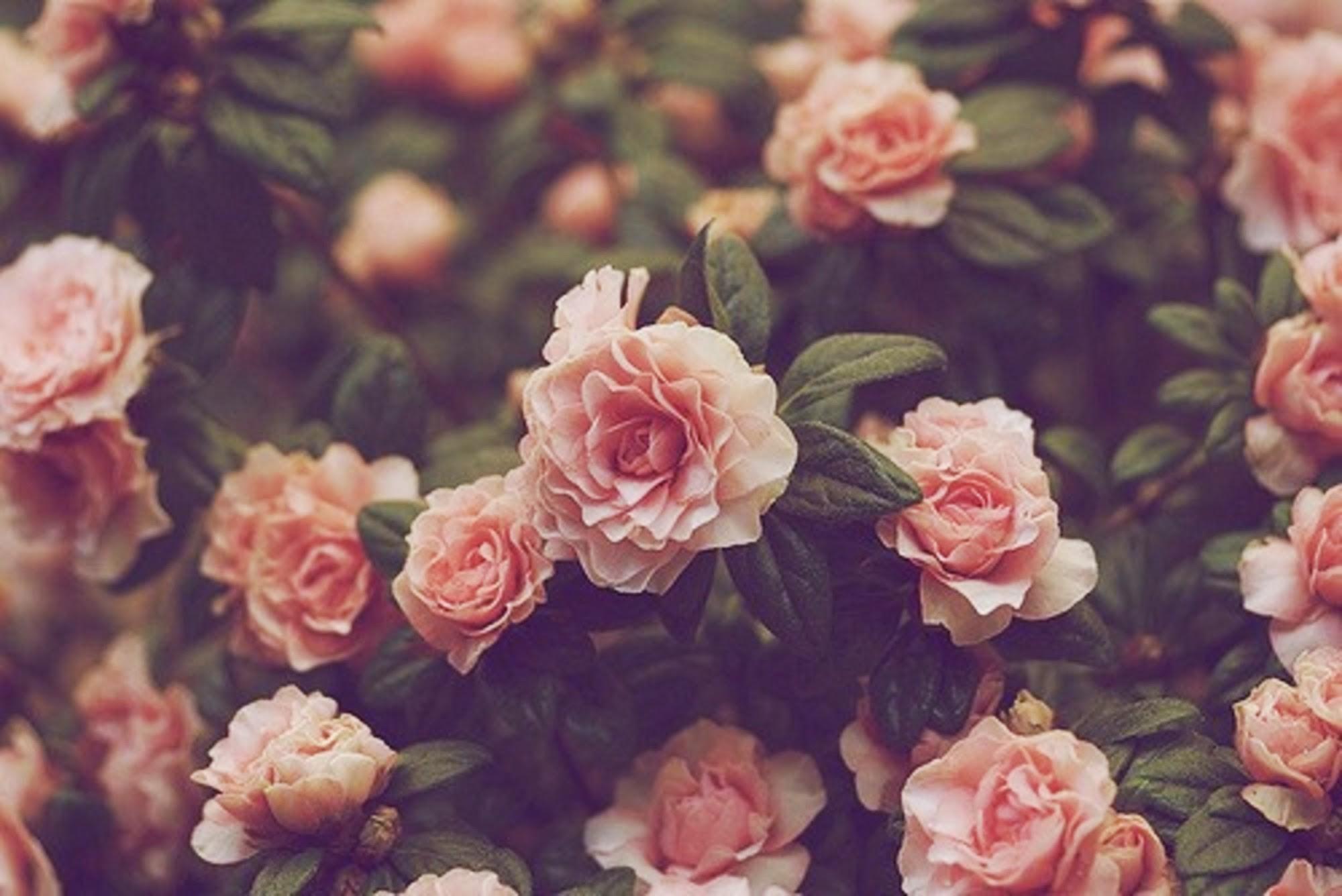 Vintage Flowers Wallpaper 68 Pictures