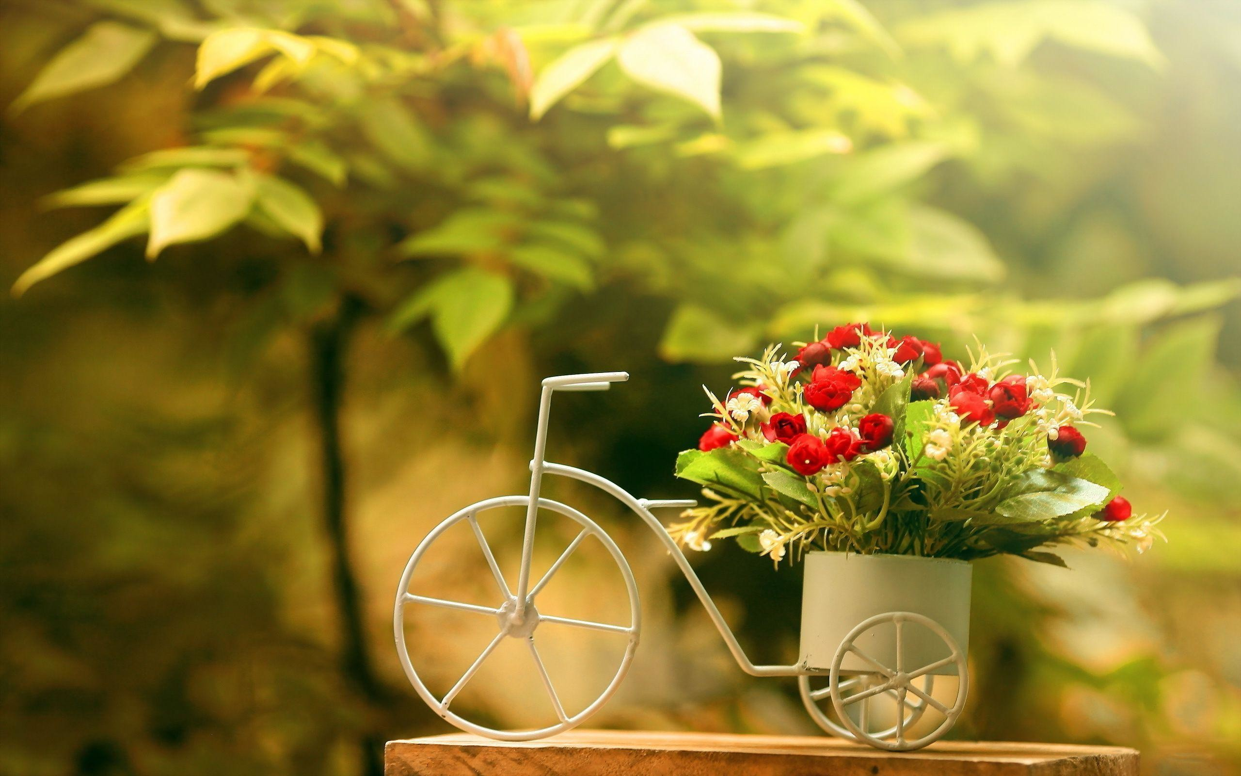 Full Hd Flowers Wallpapers 68 Pictures