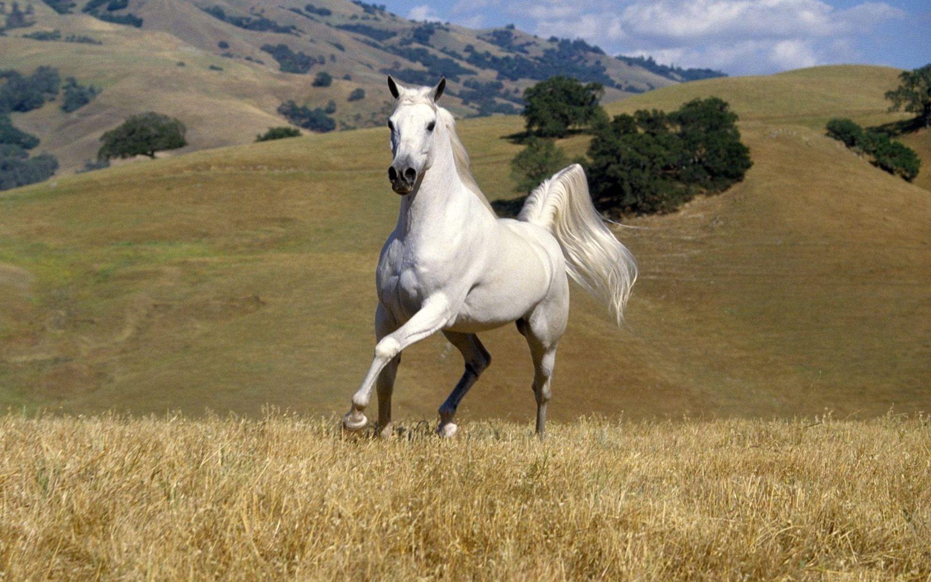 Wallpaper Horses 71 Pictures
