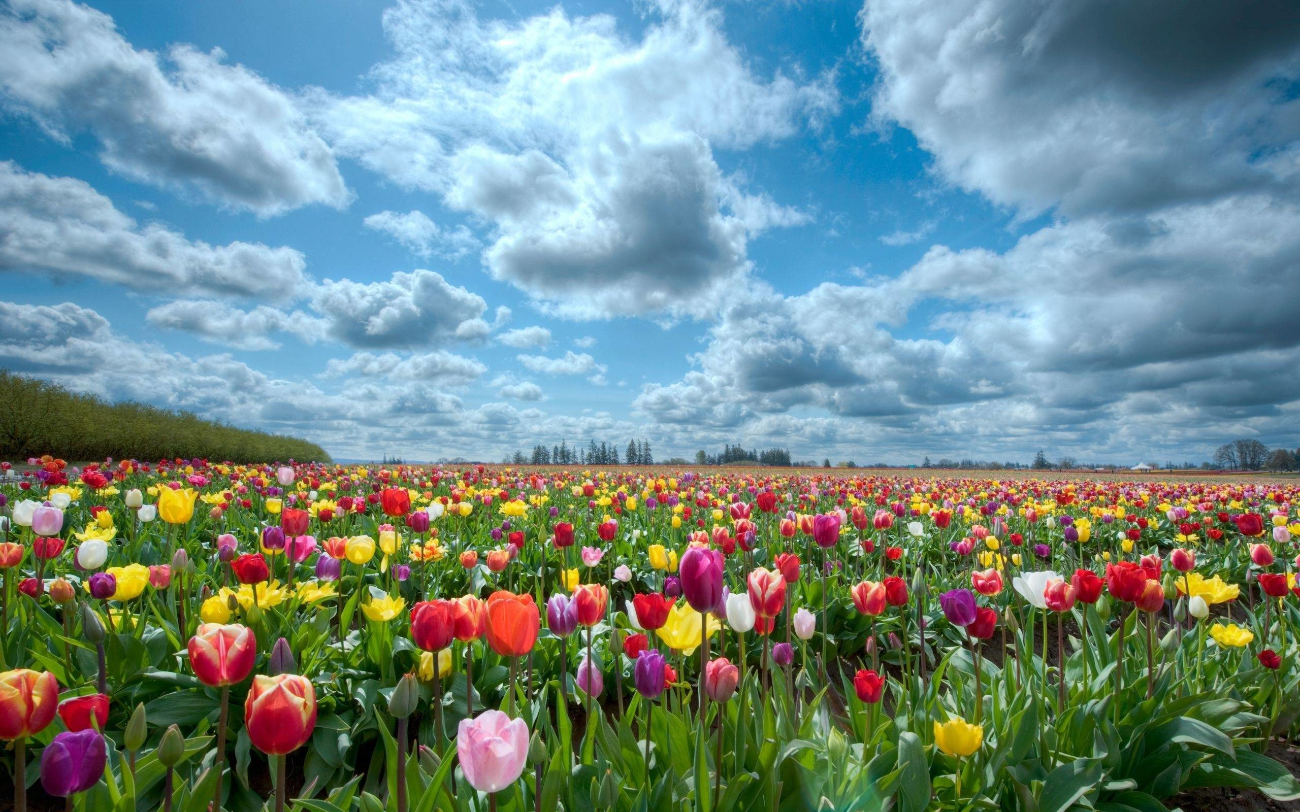Flower Garden Backgrounds 47 Pictures